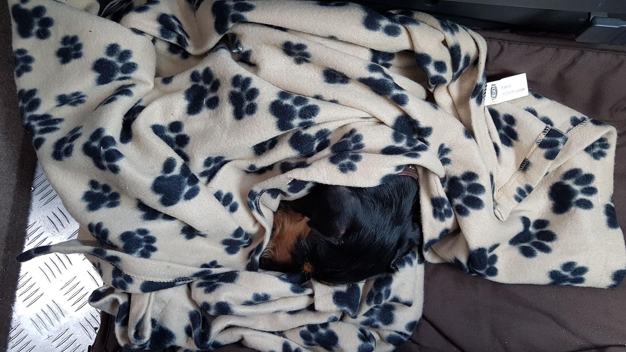 Olly unter der Decke