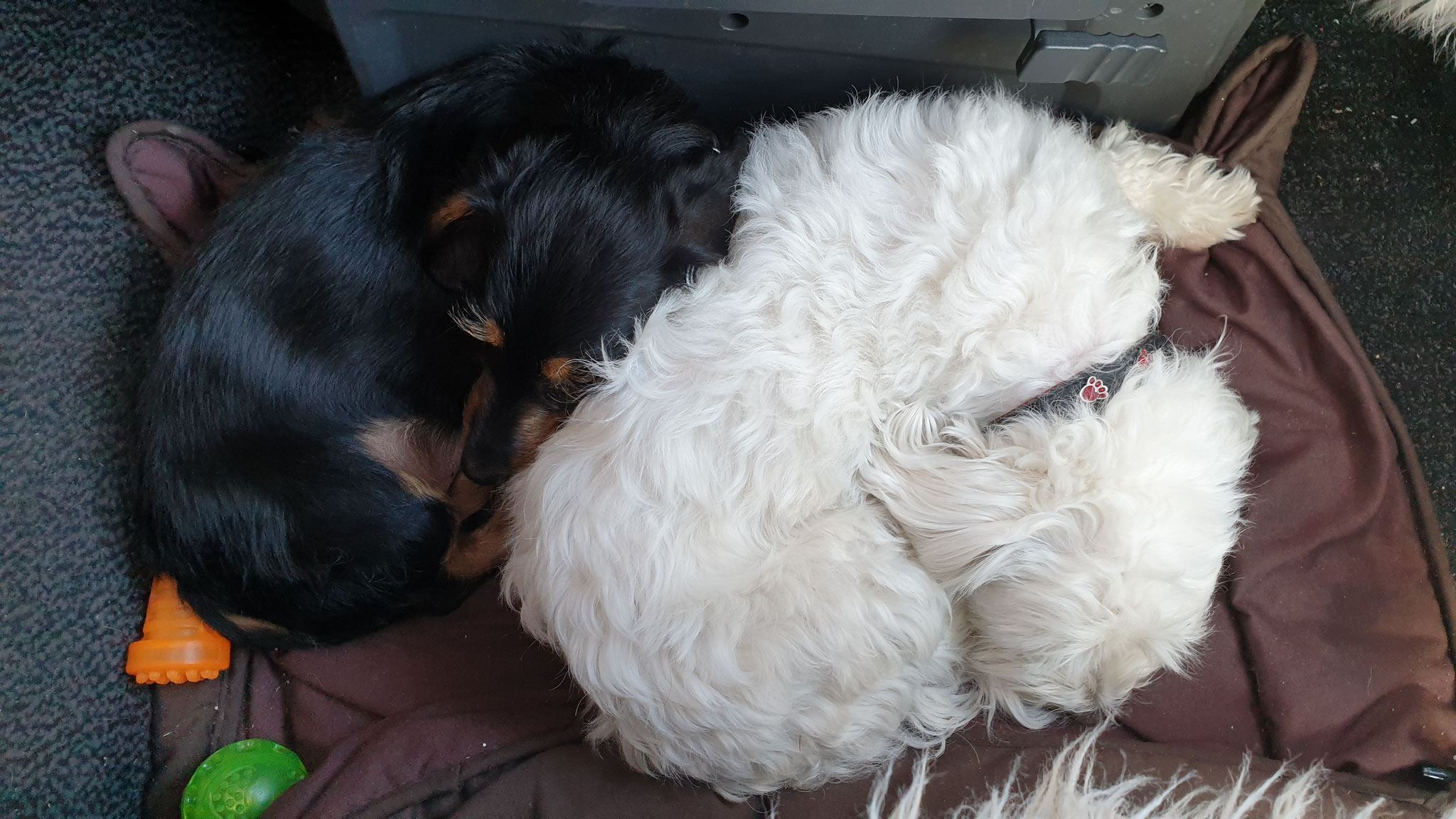 Wilson & Olly verschlafen alle Grenzübertritte