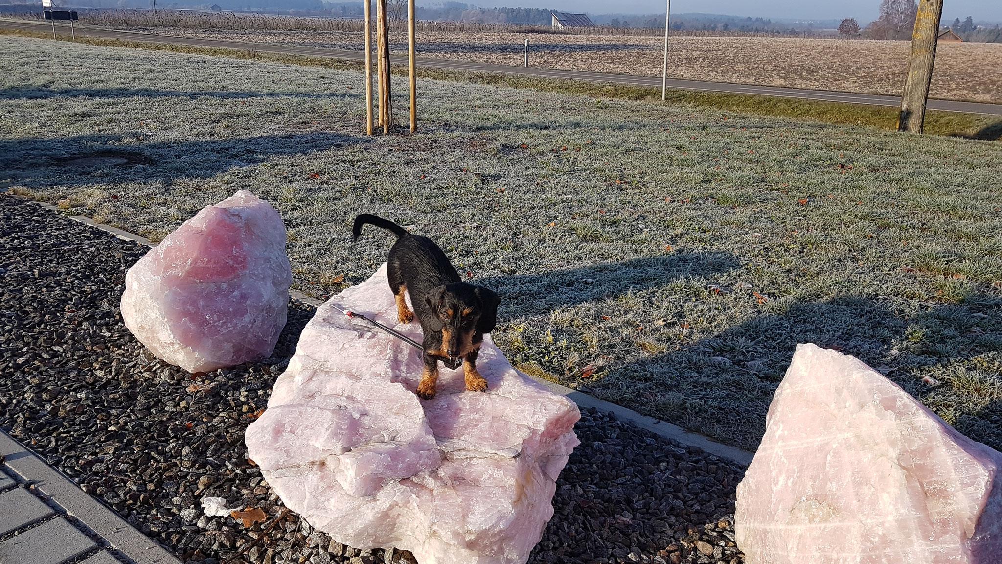 Olly steht auf edle Steine