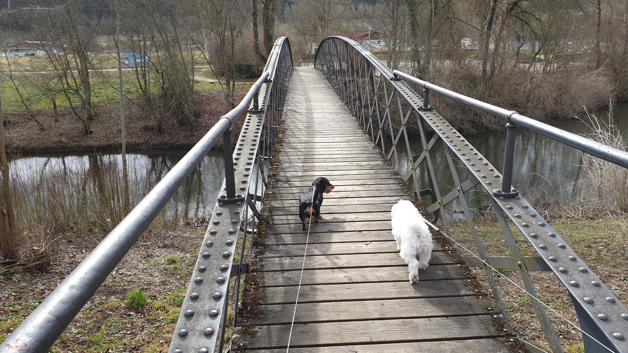 Die altbekannte Brücke über die alte Donau