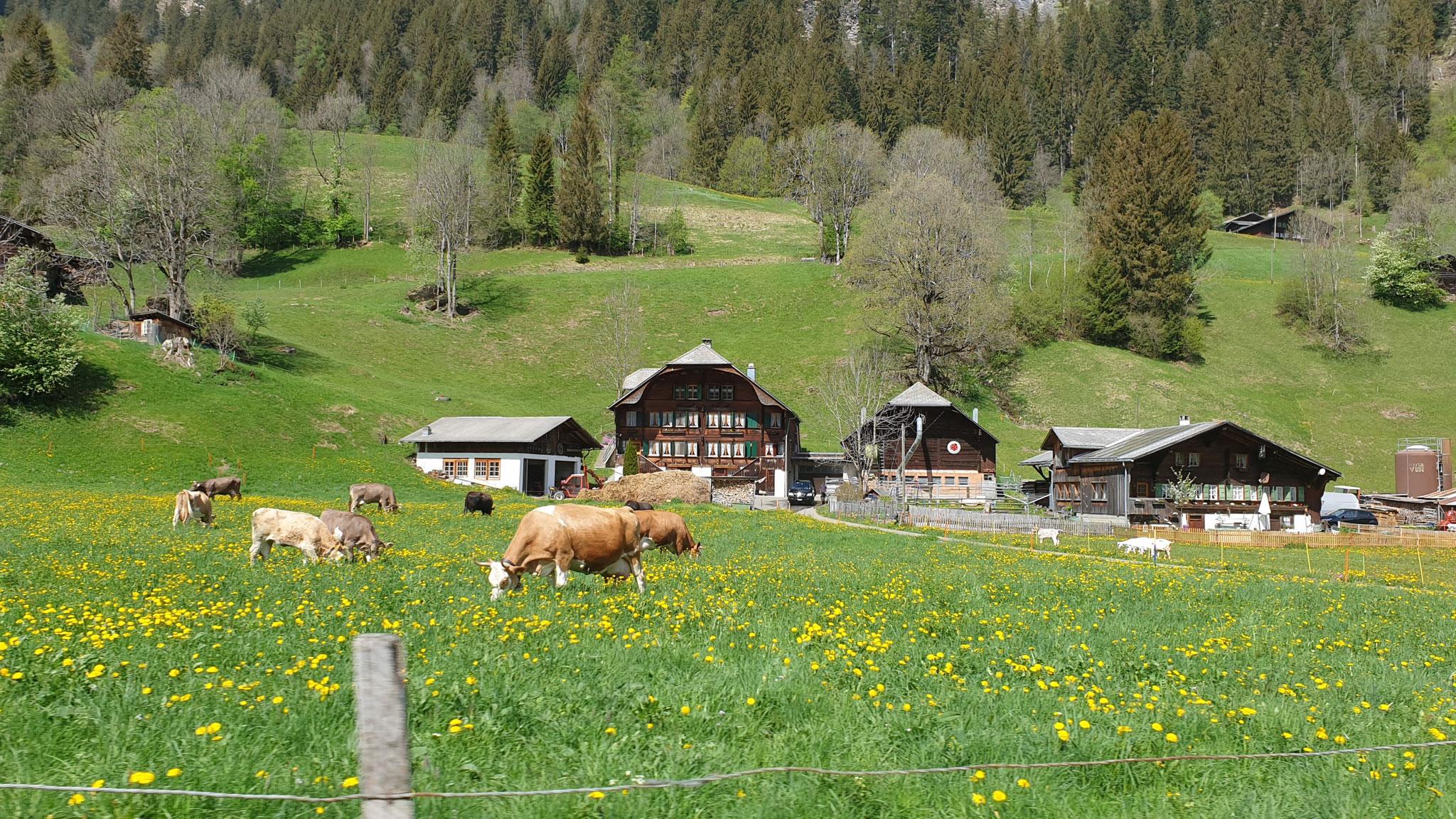 Schweizerische Idylle - nur ein Mythos oder Tatsache?!