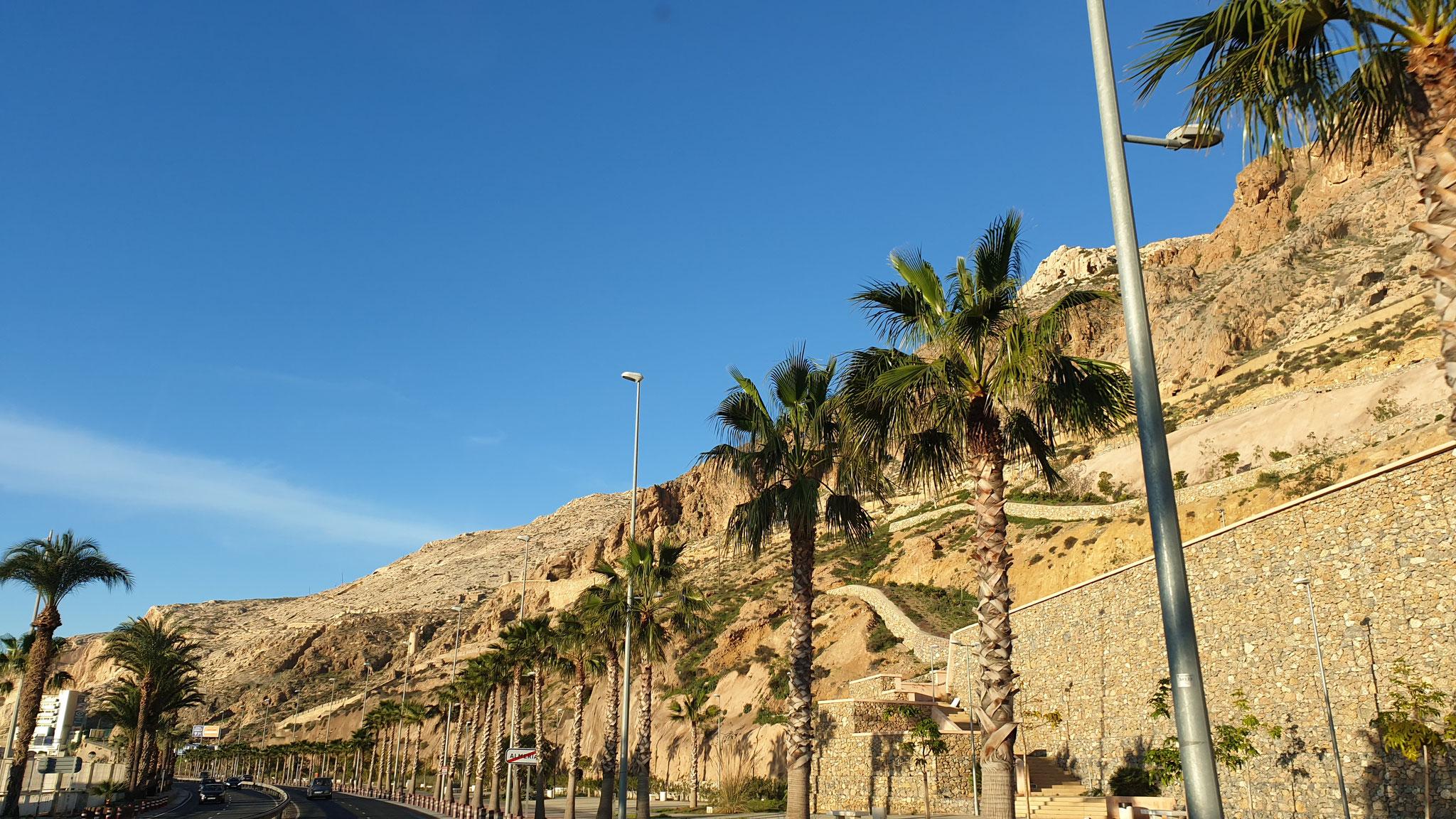 ...und Urlaubsstimmung mit Palmen