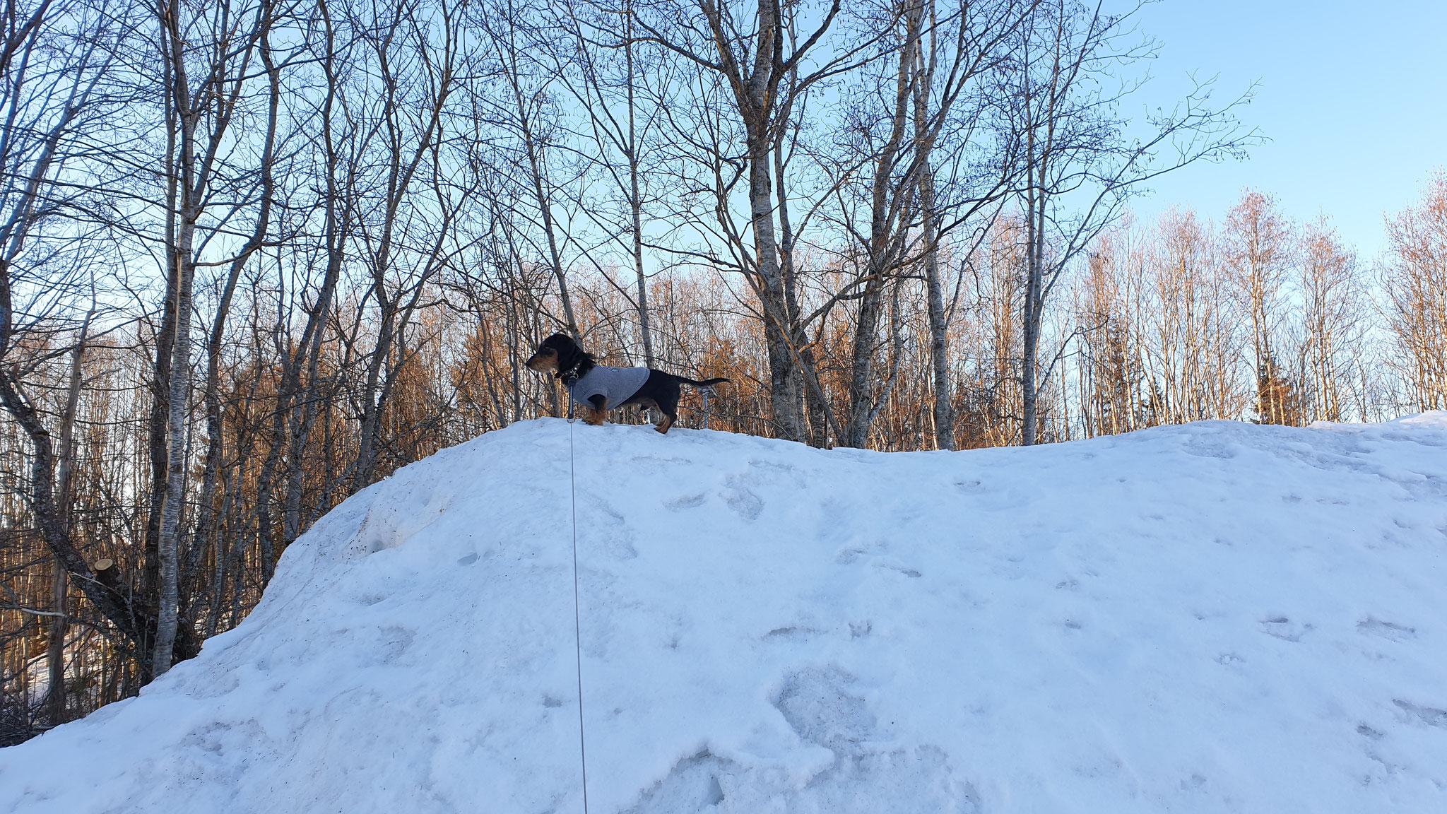 Brrr ist das kalt im Schnee in Mosjøen...
