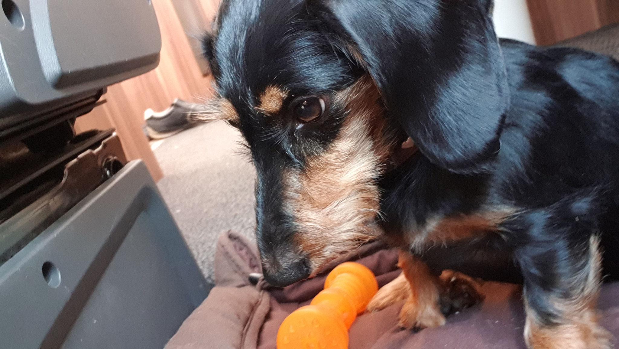 ...und Olly hat seinen geliebten Knochen zurück