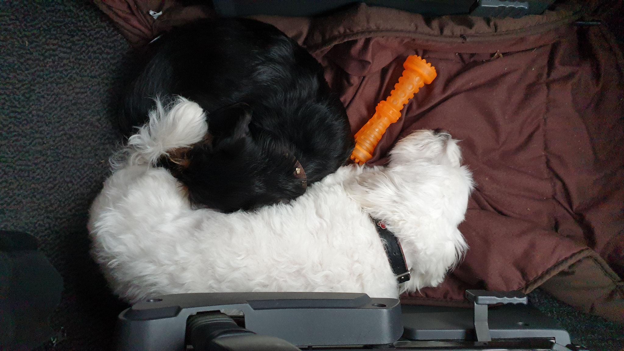 Die beiden gönnen sich eine Mütze Schlaf auf dem Heimweg