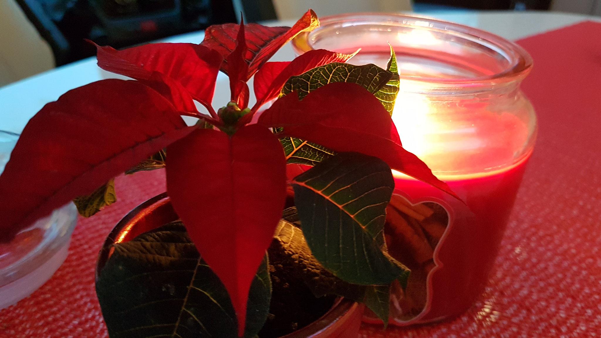 ...ein kleiner Weihnachtsstern