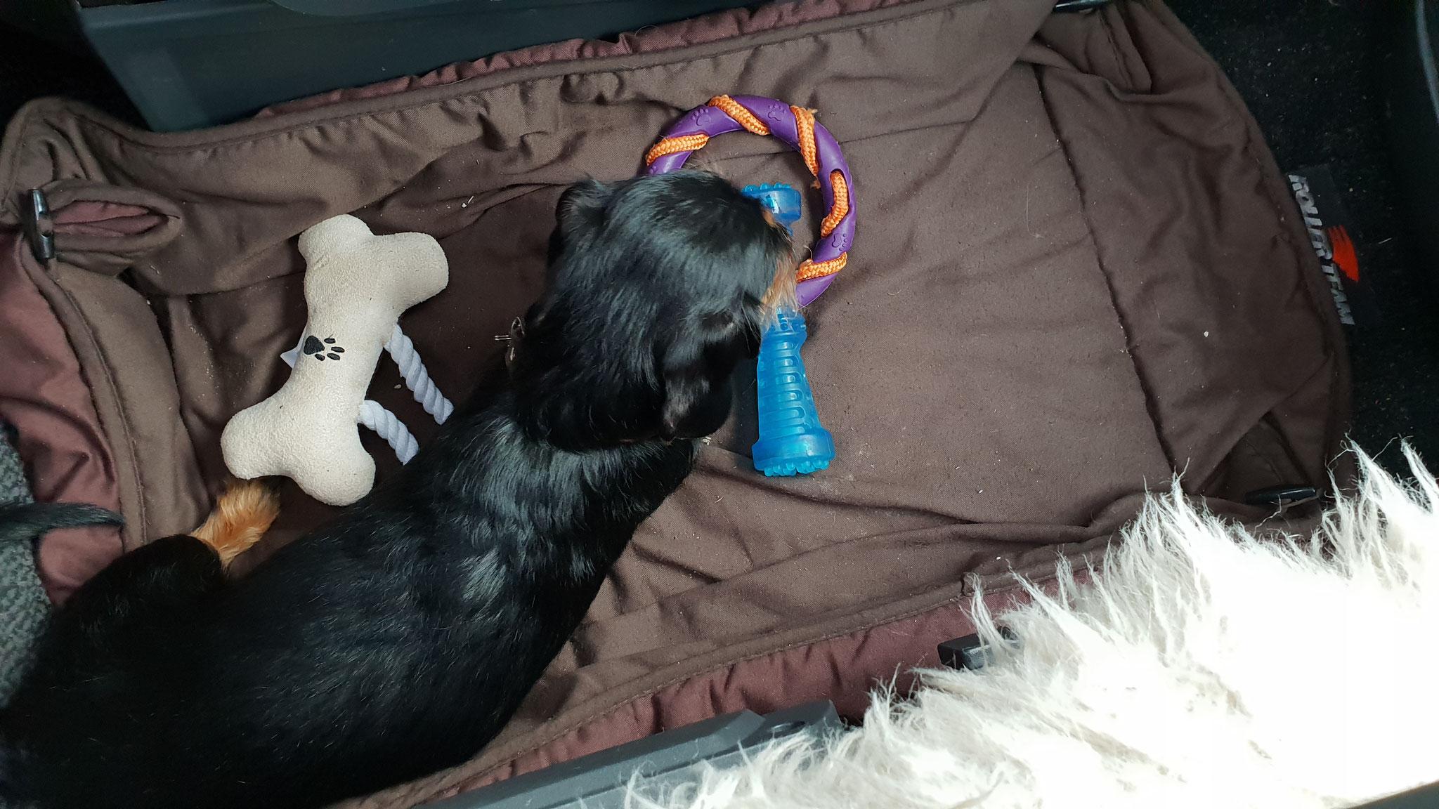 Olly stellt sich eine Auswahl an Spielzeug zusammen