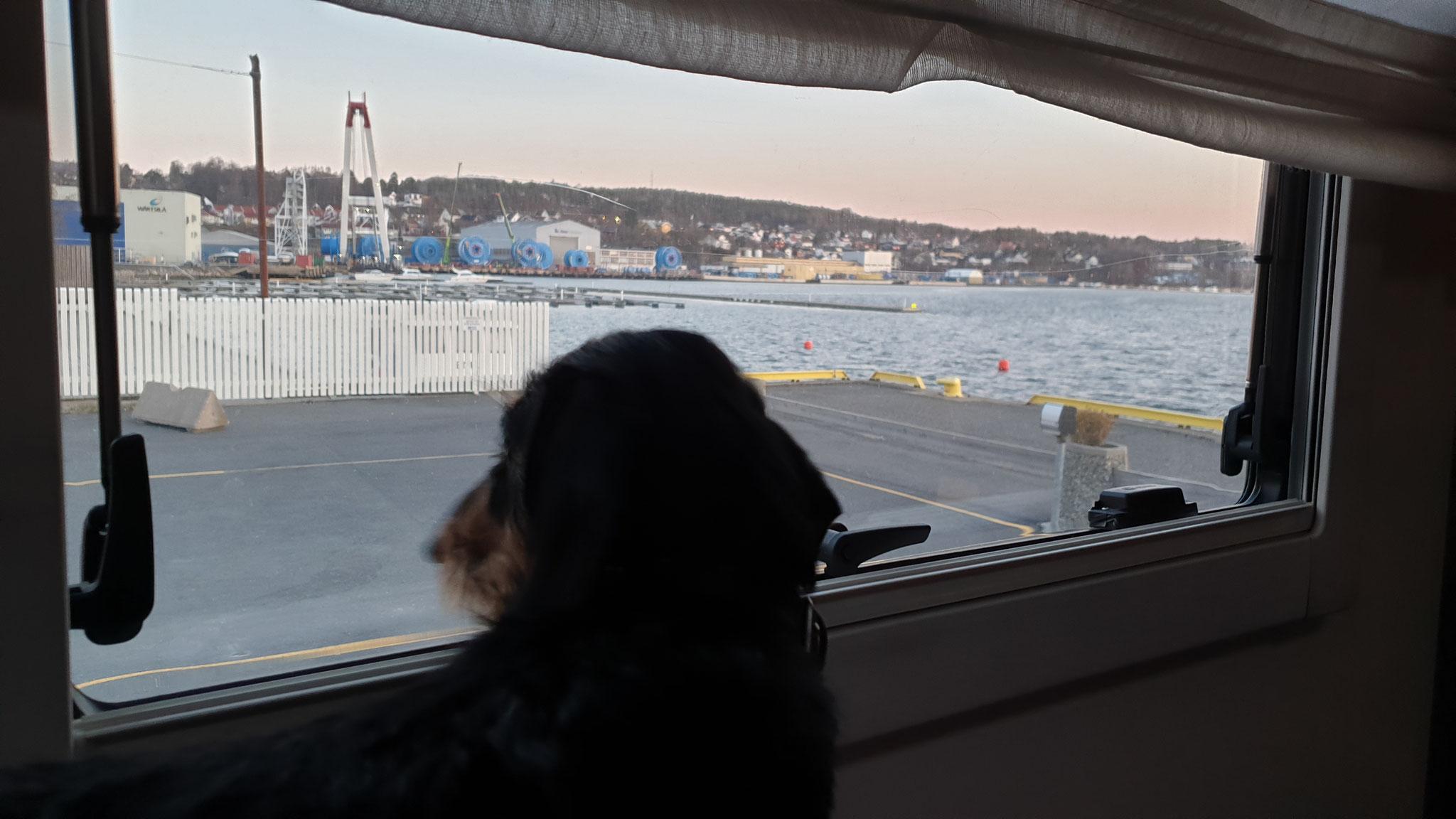 Olly hält Ausschau nach den Fischern