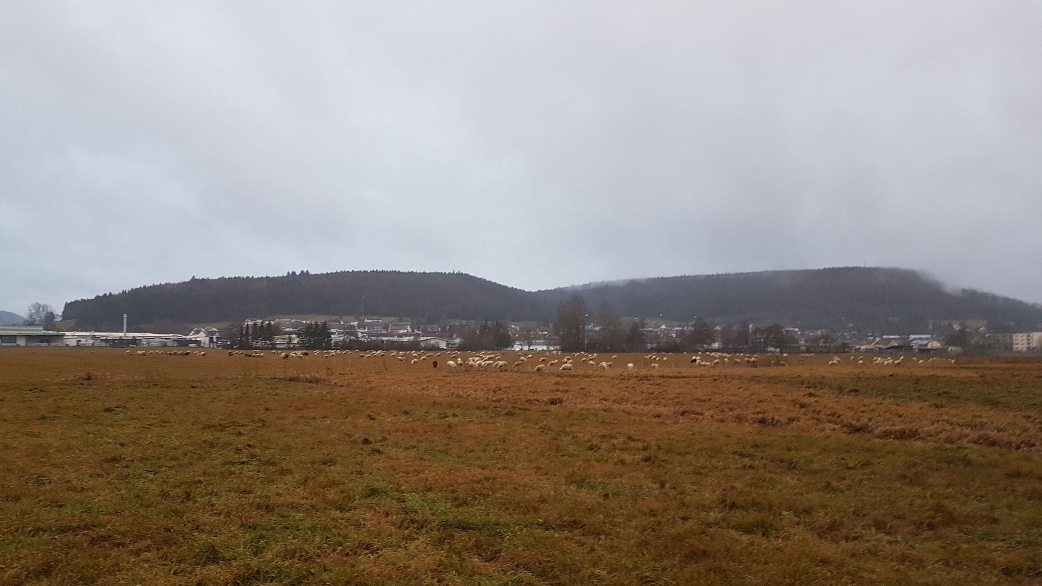 Schafe gucken...