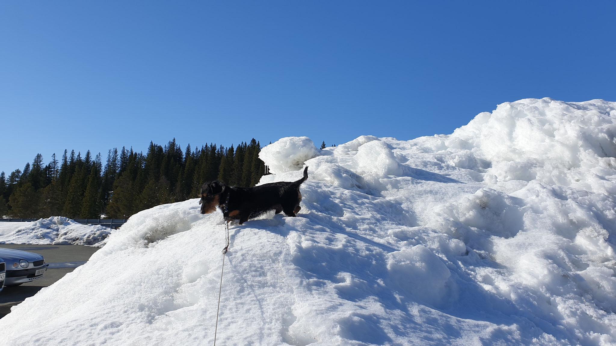 Olly geniesst den Schnee
