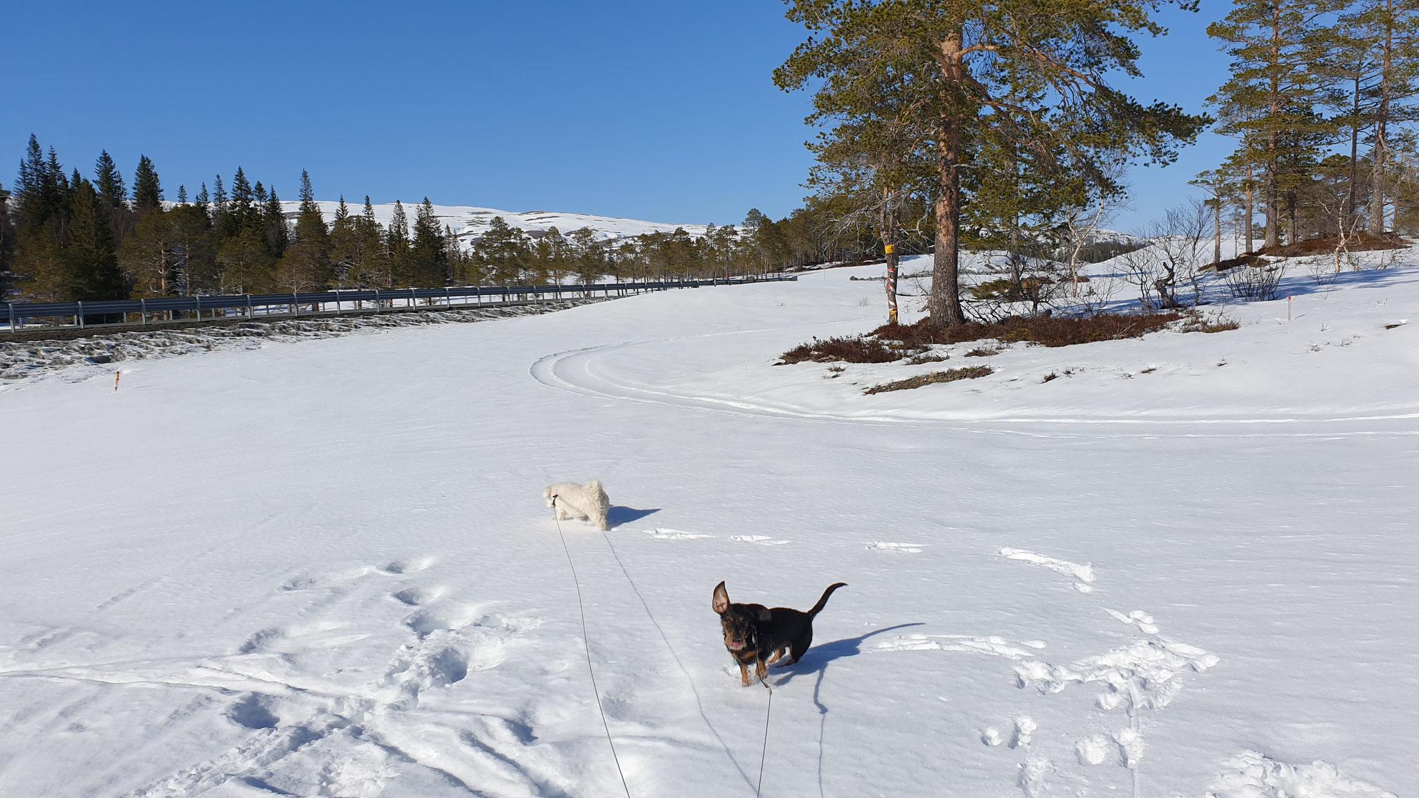 Blauer Himmel, weisser Schnee...