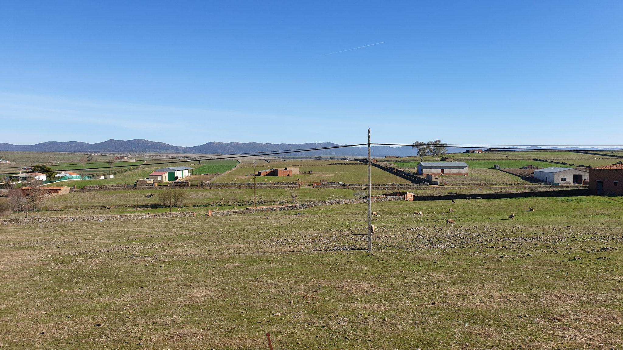 Gestern war Oliventag, heute ist Schafstag...und Rindertrag