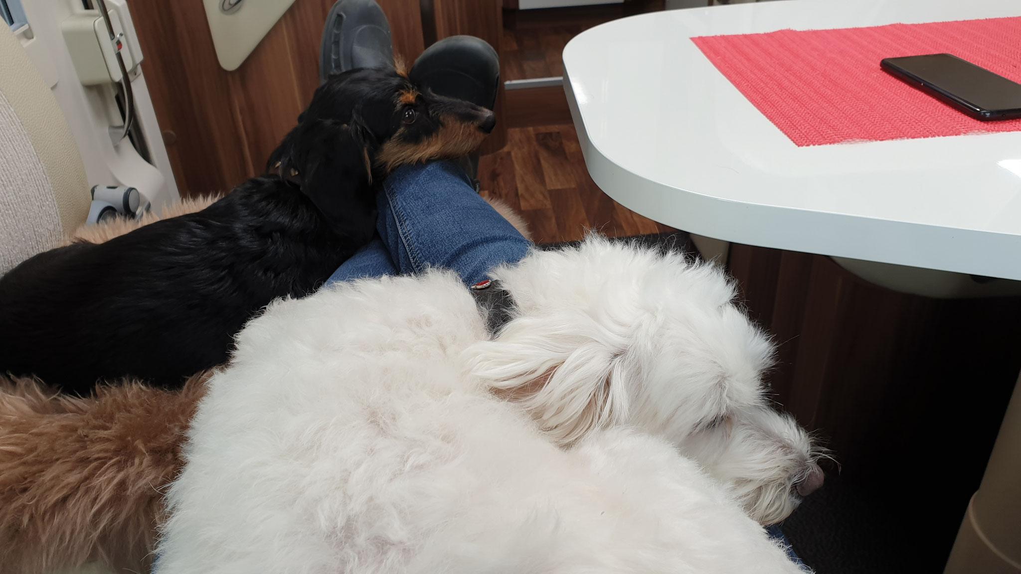 Wilson und Olly lieben es zu kuscheln