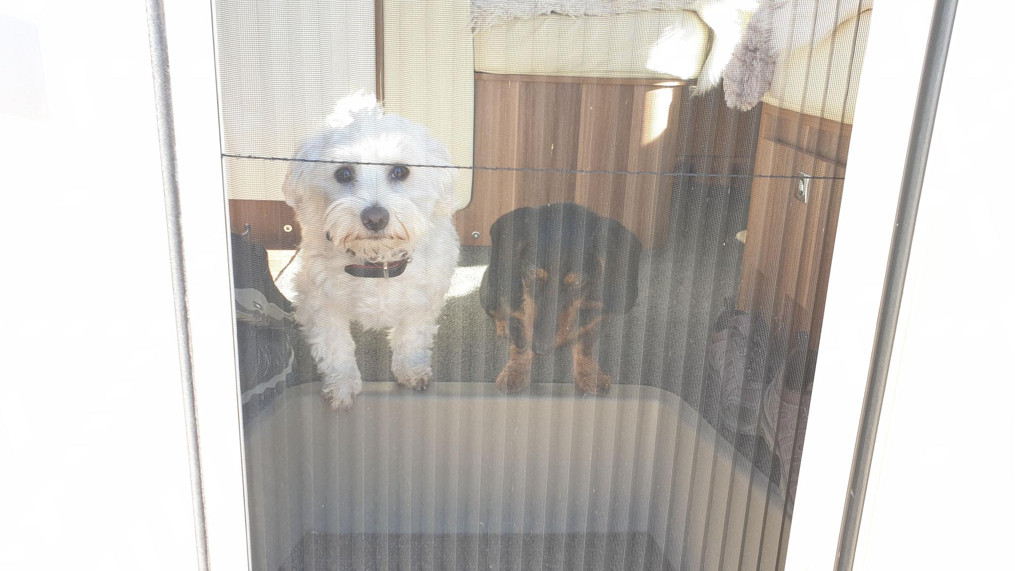 Wilson & Olly warten brav, bis es raus geht