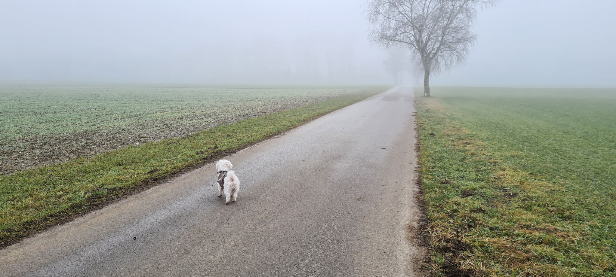 Langer Spaziergang am Nachmittag - im Nebel