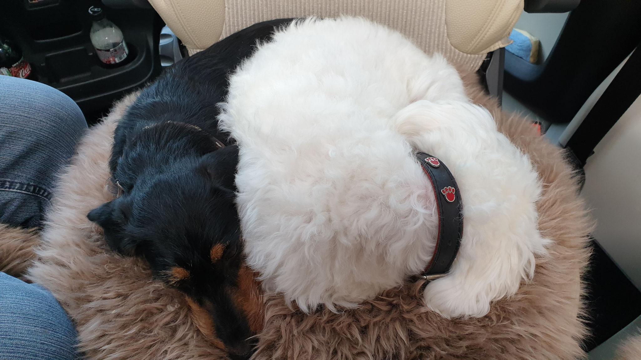 Wilson & Olly kuscheln sich noch ein wenig zusammen