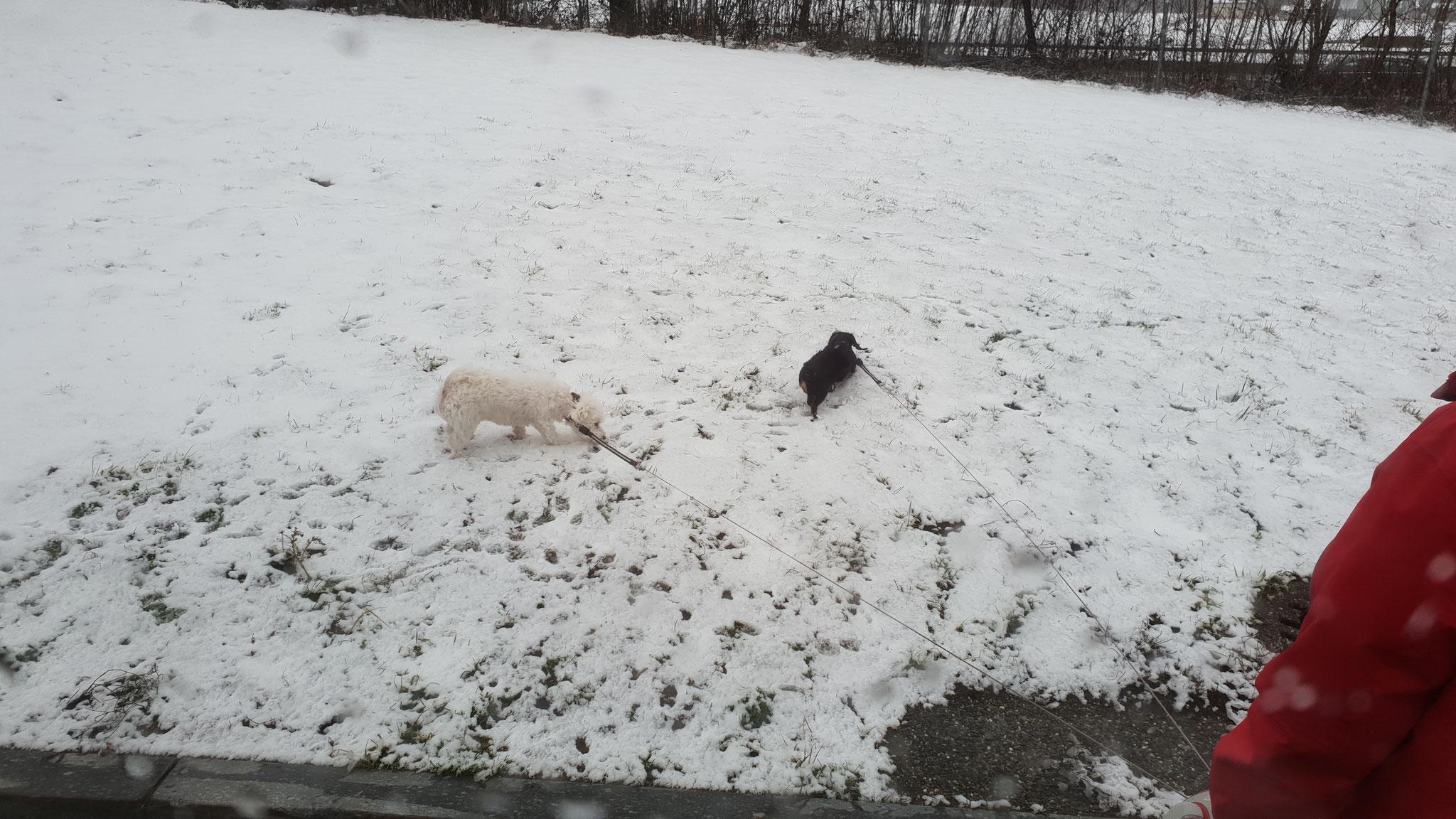 Uiii wie das stürmt und schneit