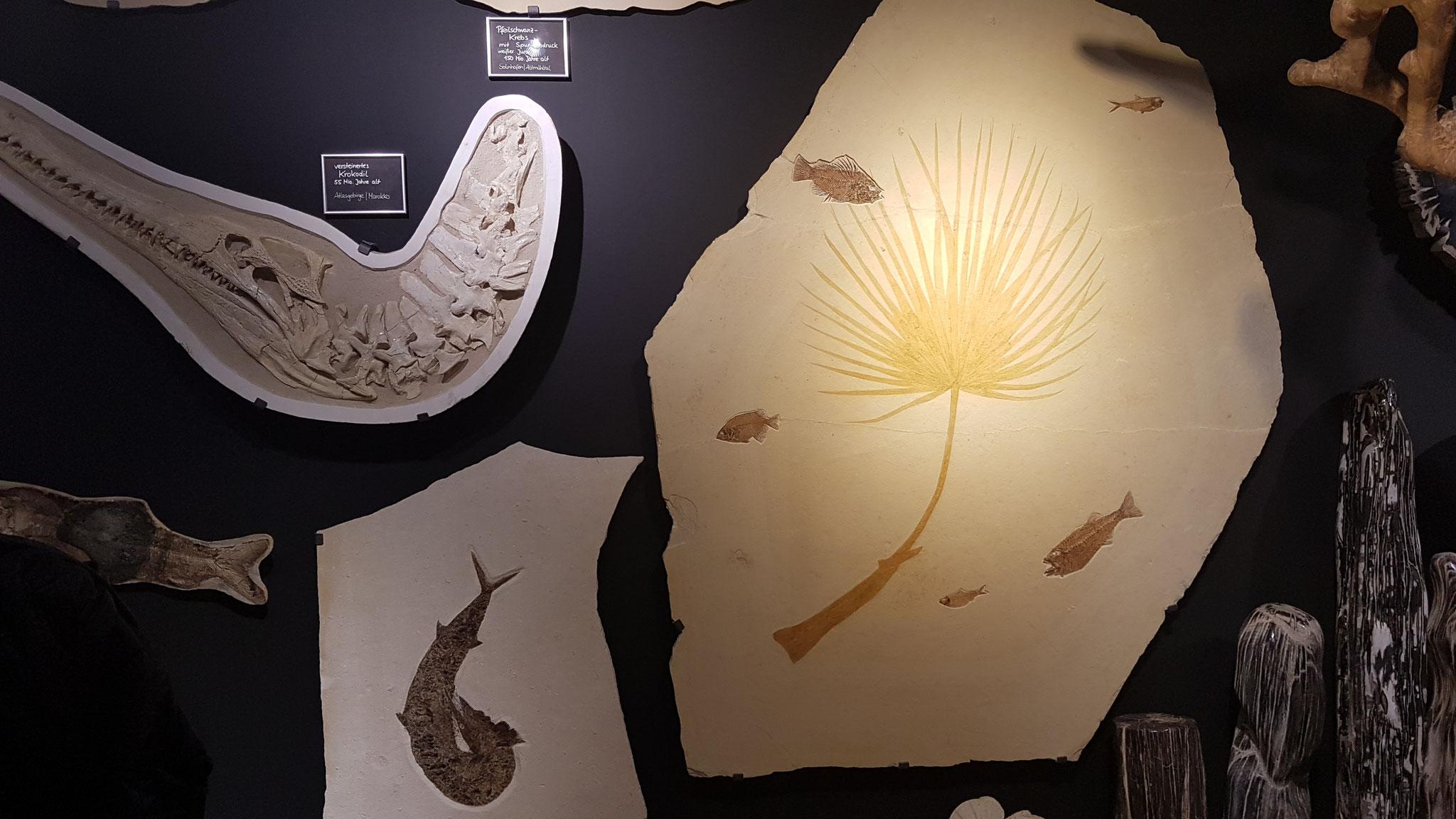 Viele Fossilien gibt es zu sehen...