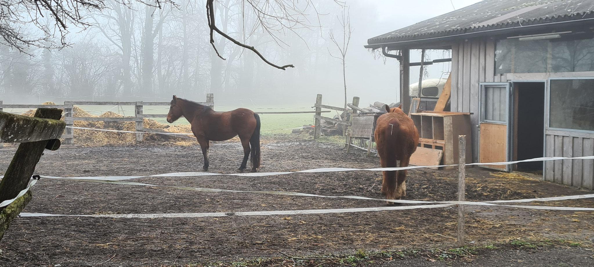 Wir haben es besser als die Pferde...