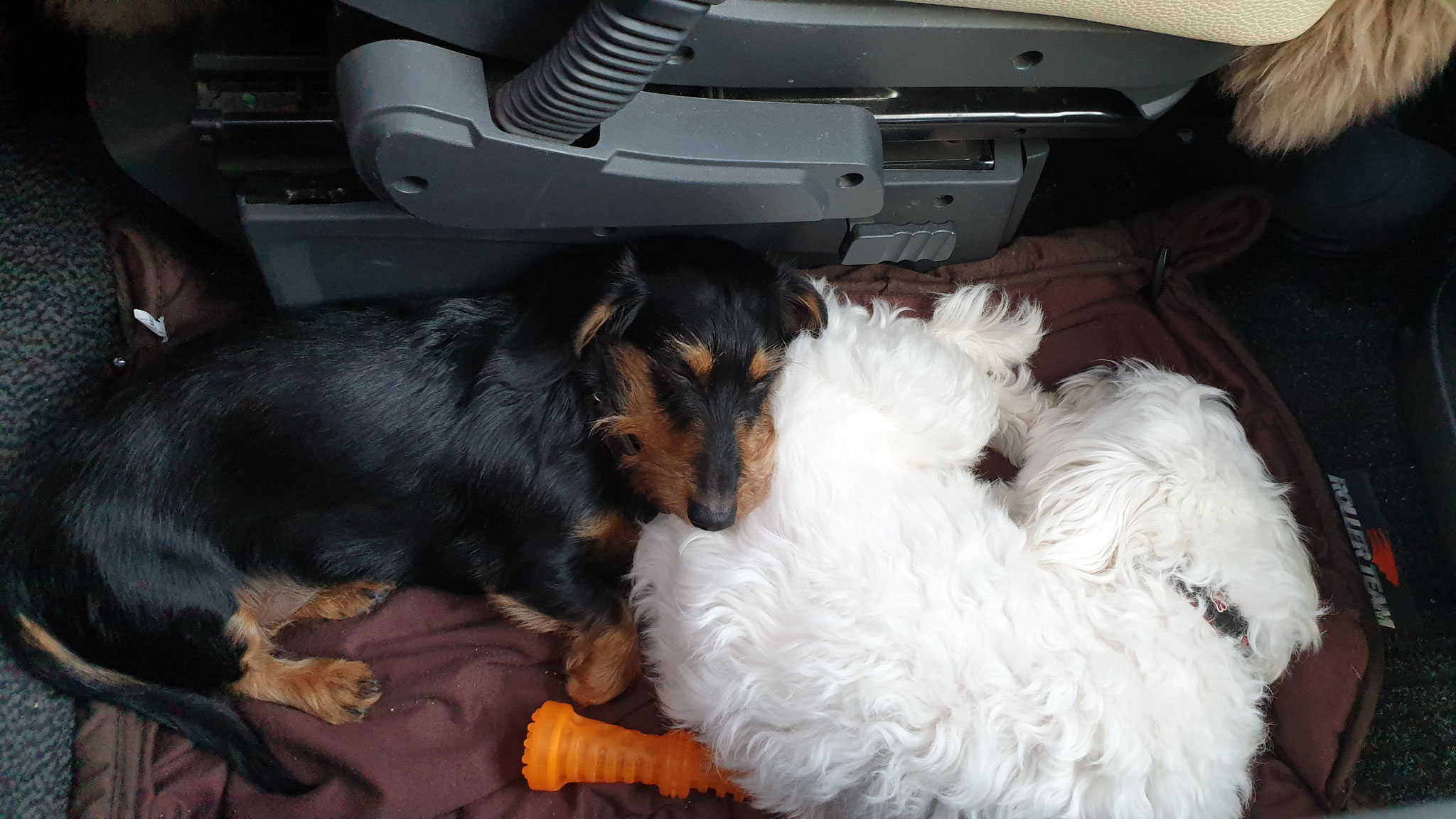 Die beiden schlafen gemütlich zwischen den Sitzen