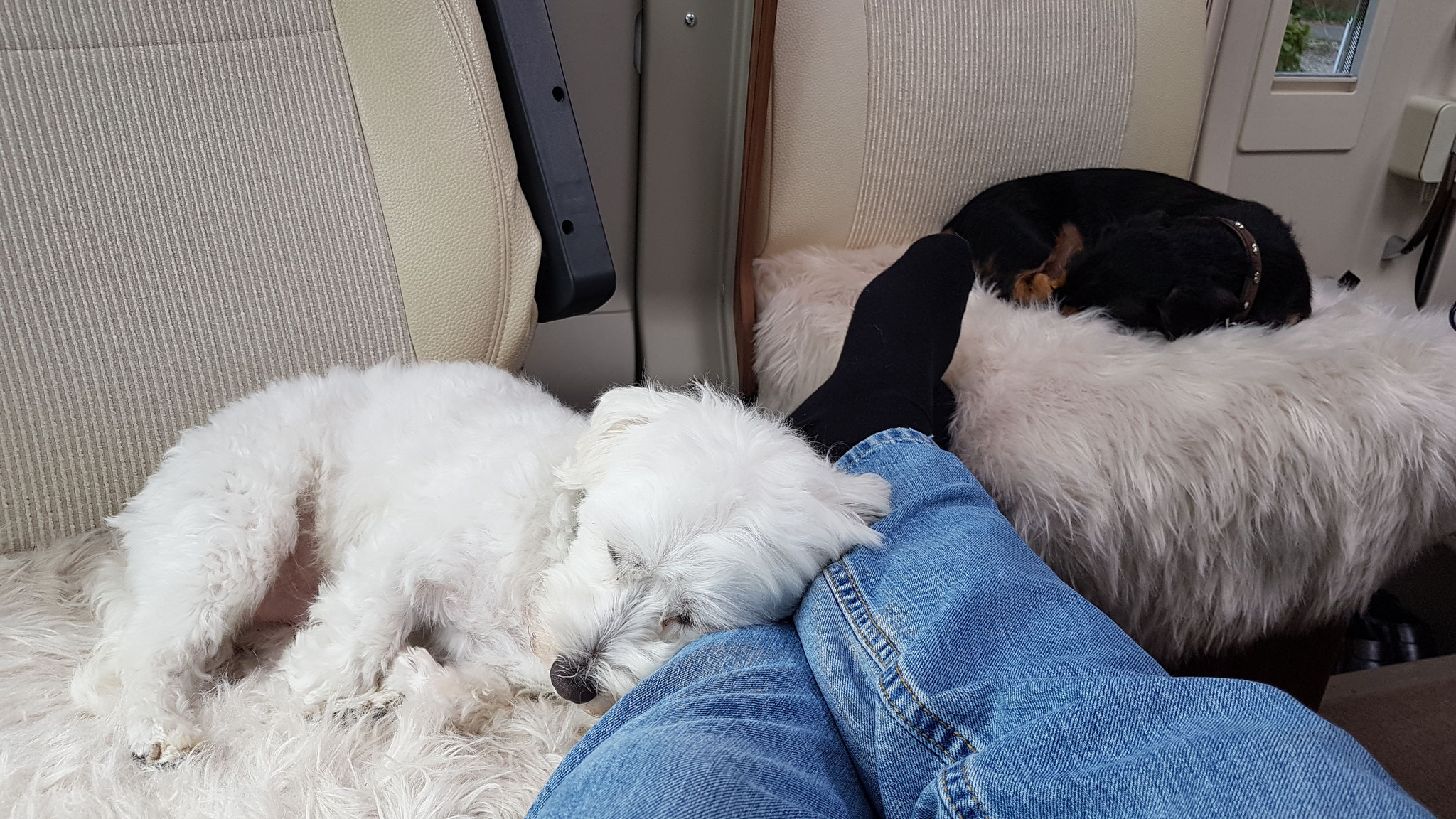 Zwei Jungs nach dem langen Spaziergang total müde