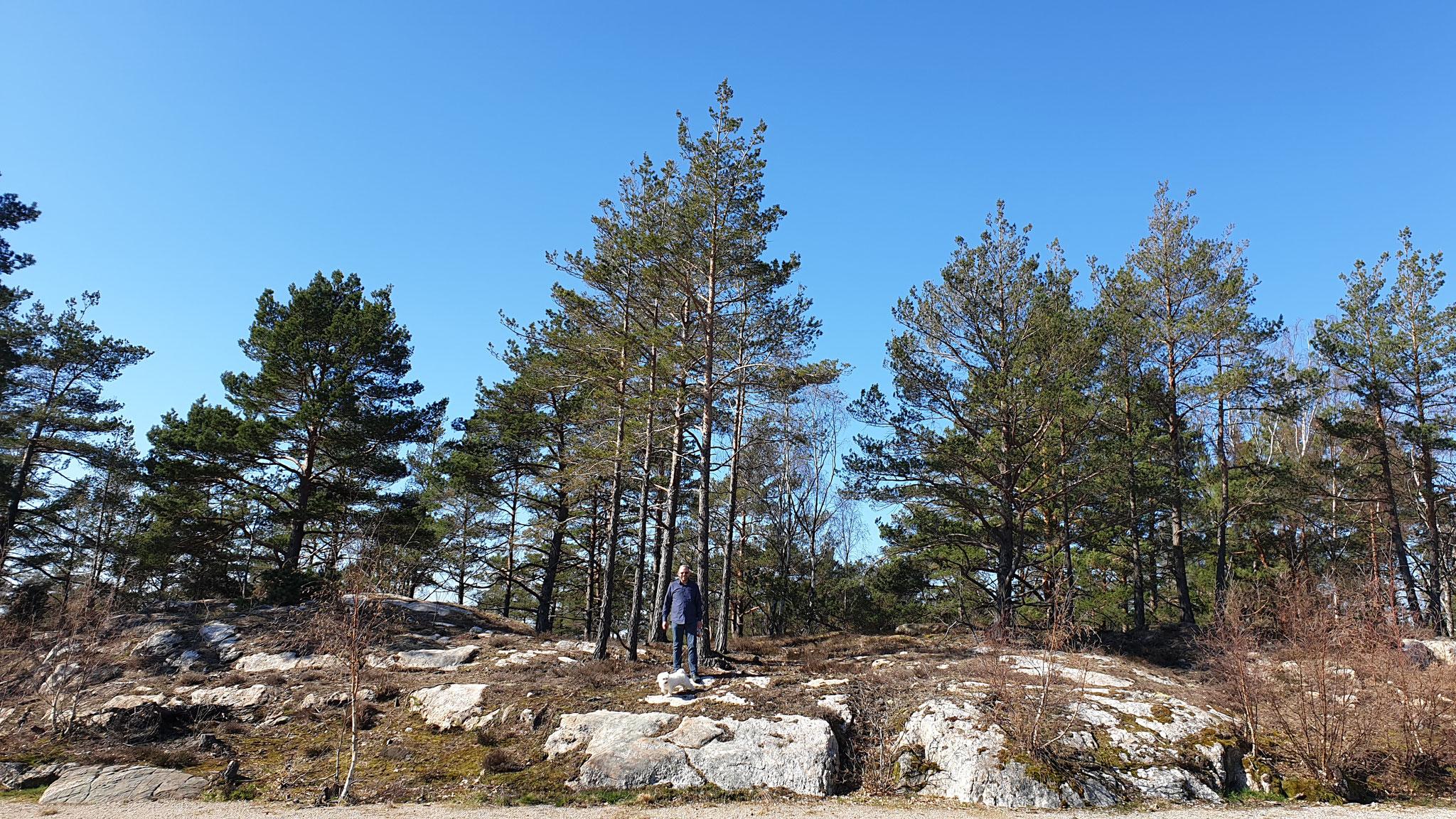 Zwei kleine Bergziegen statt Elch