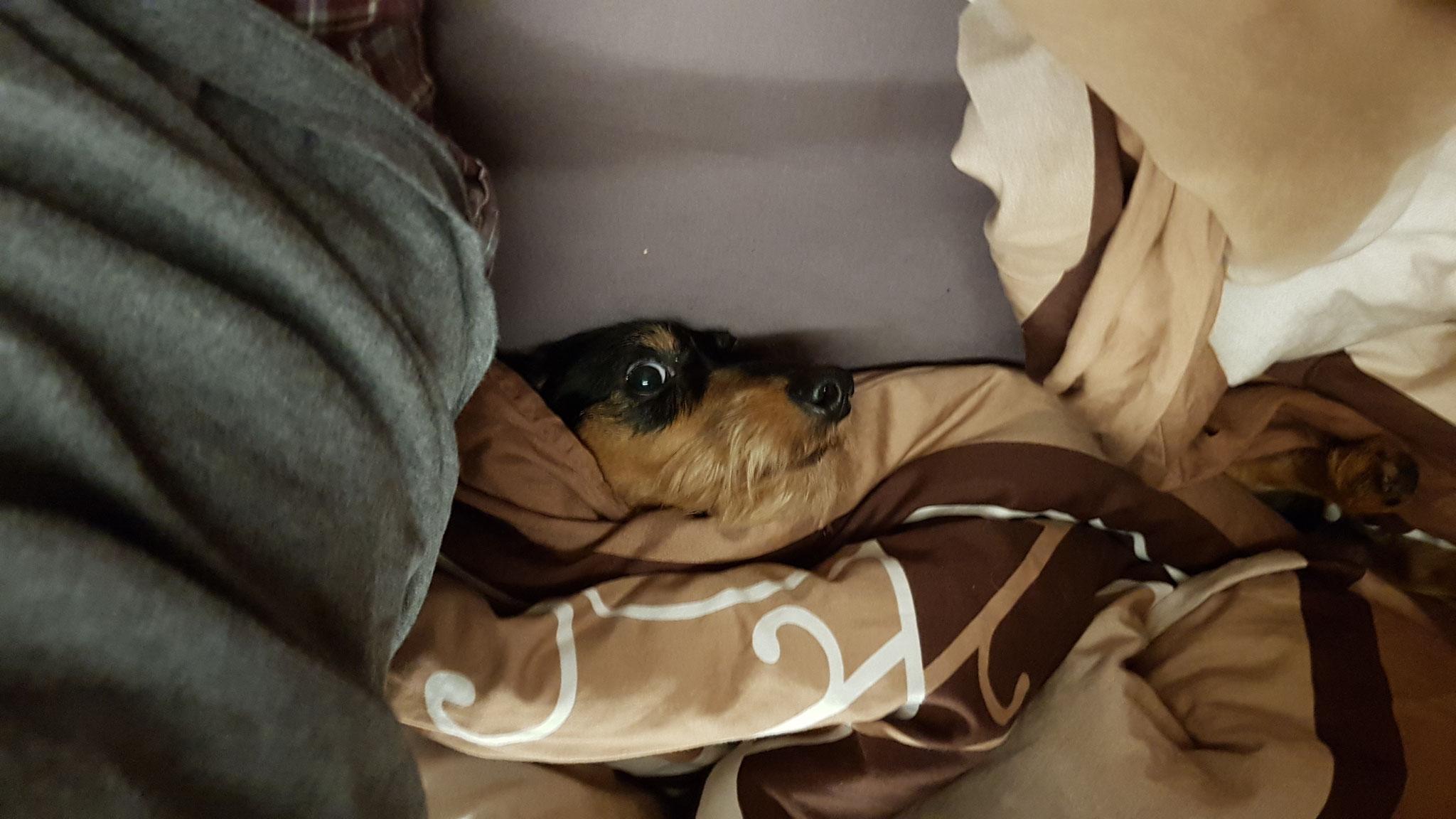 Olly bleibt auch in der Wärme