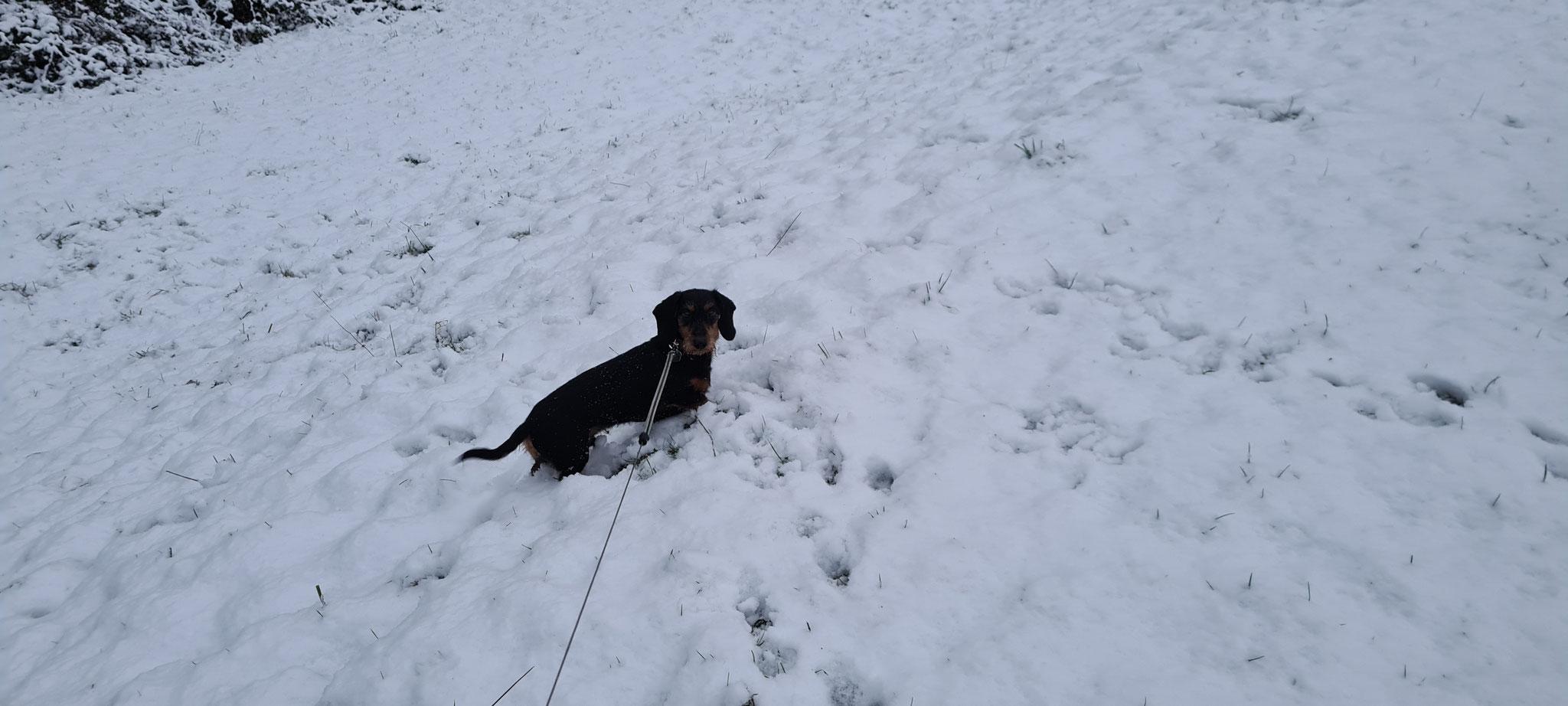 ...im Schnee und geniessen es