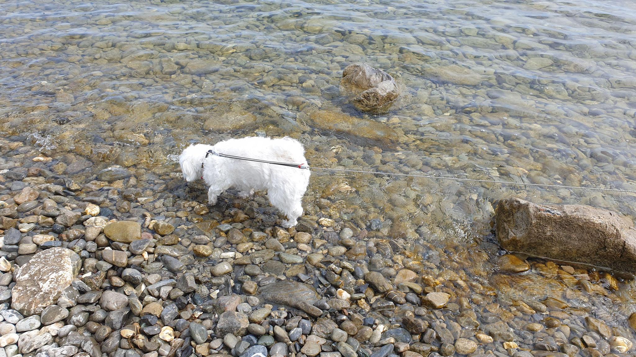 ...eine Zehe ins Wasser zu halten