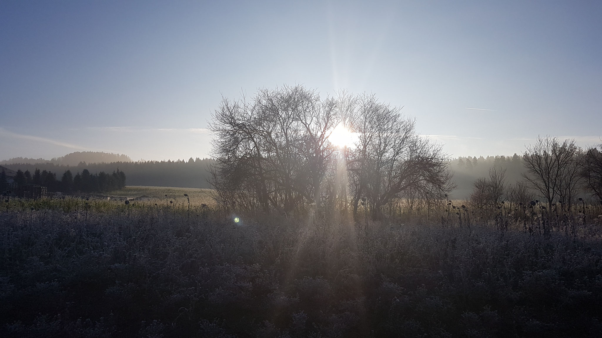 Die Sonne stimmt alle wieder milder