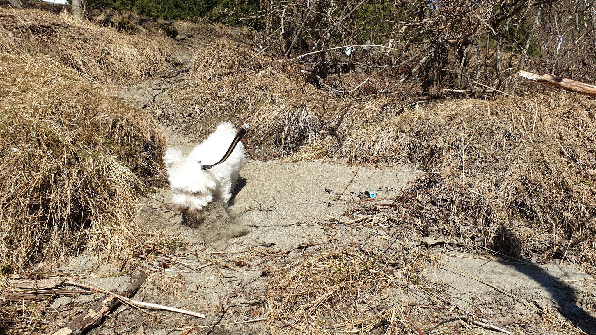 Sandbad für unseren Pelzvogel
