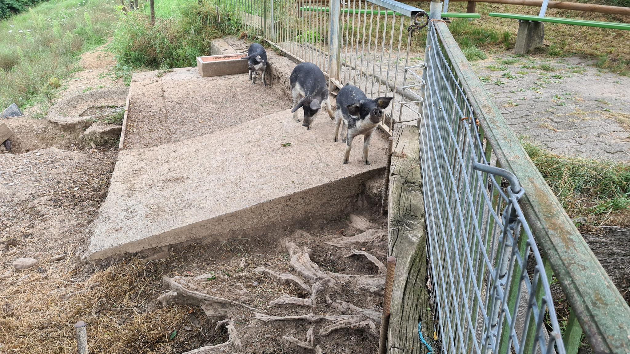 ...drei Mal Schwein gehabt ;-)