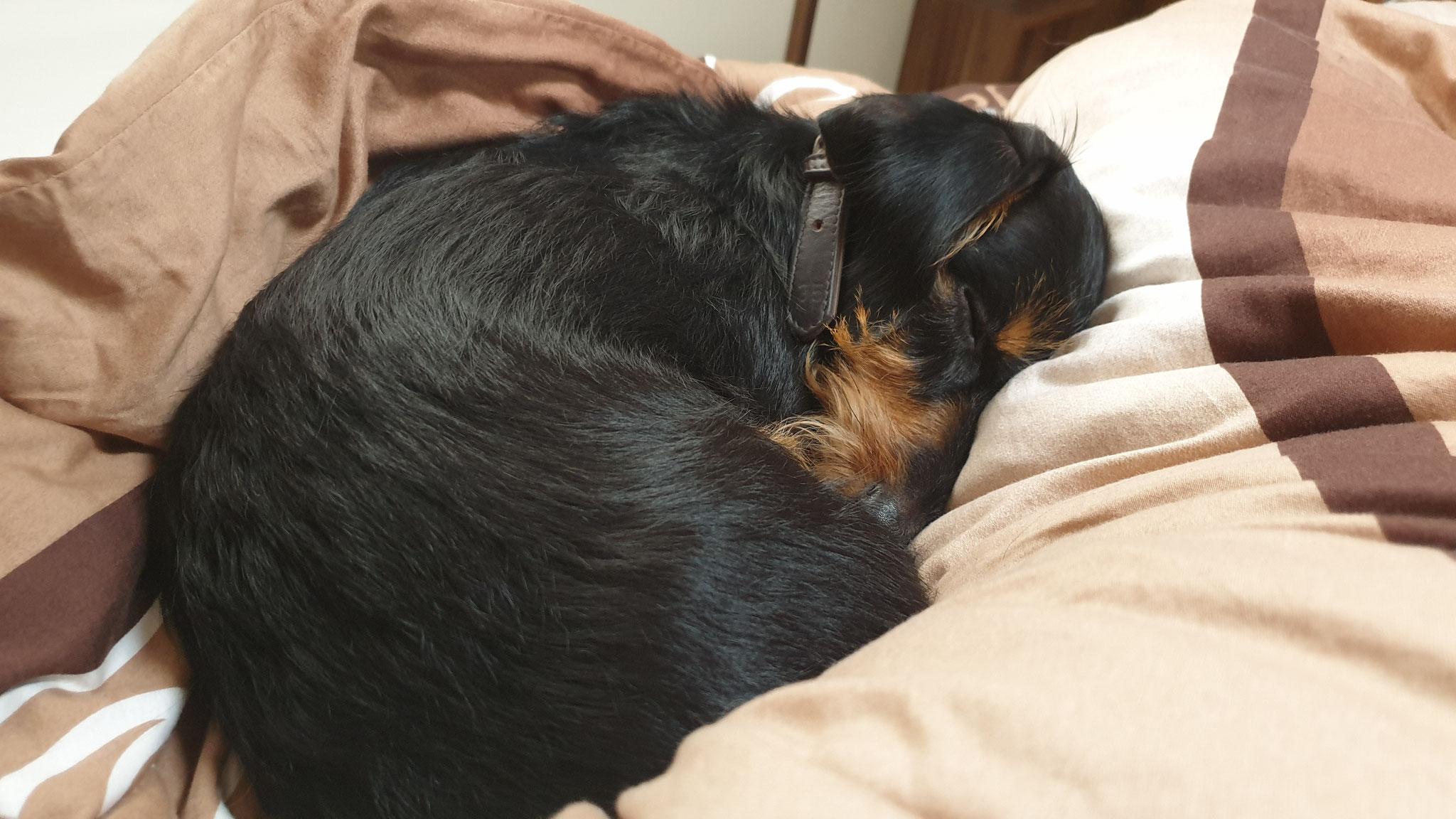 Nachmittagsschläfchen für Olly