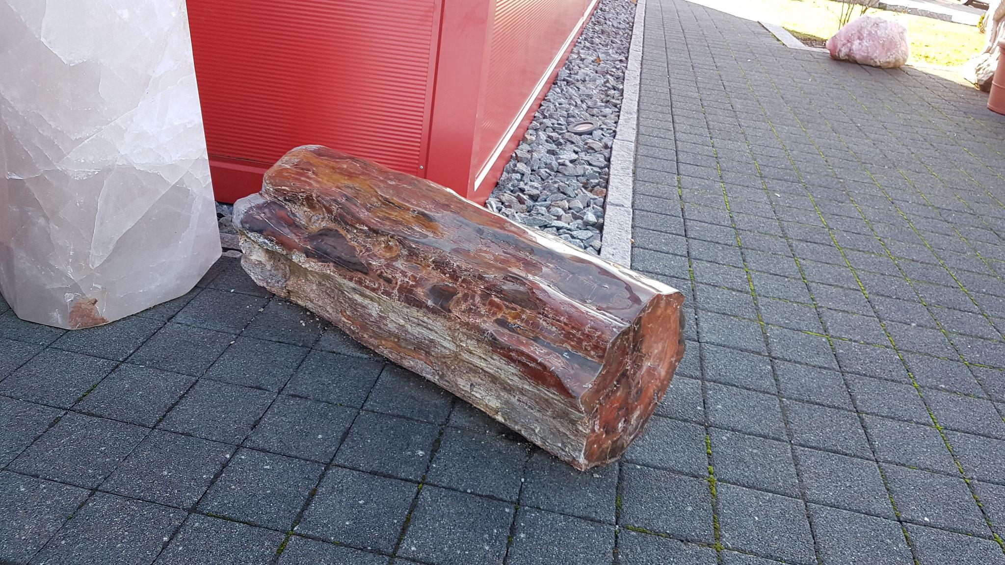 Versteinerter Holzstamm