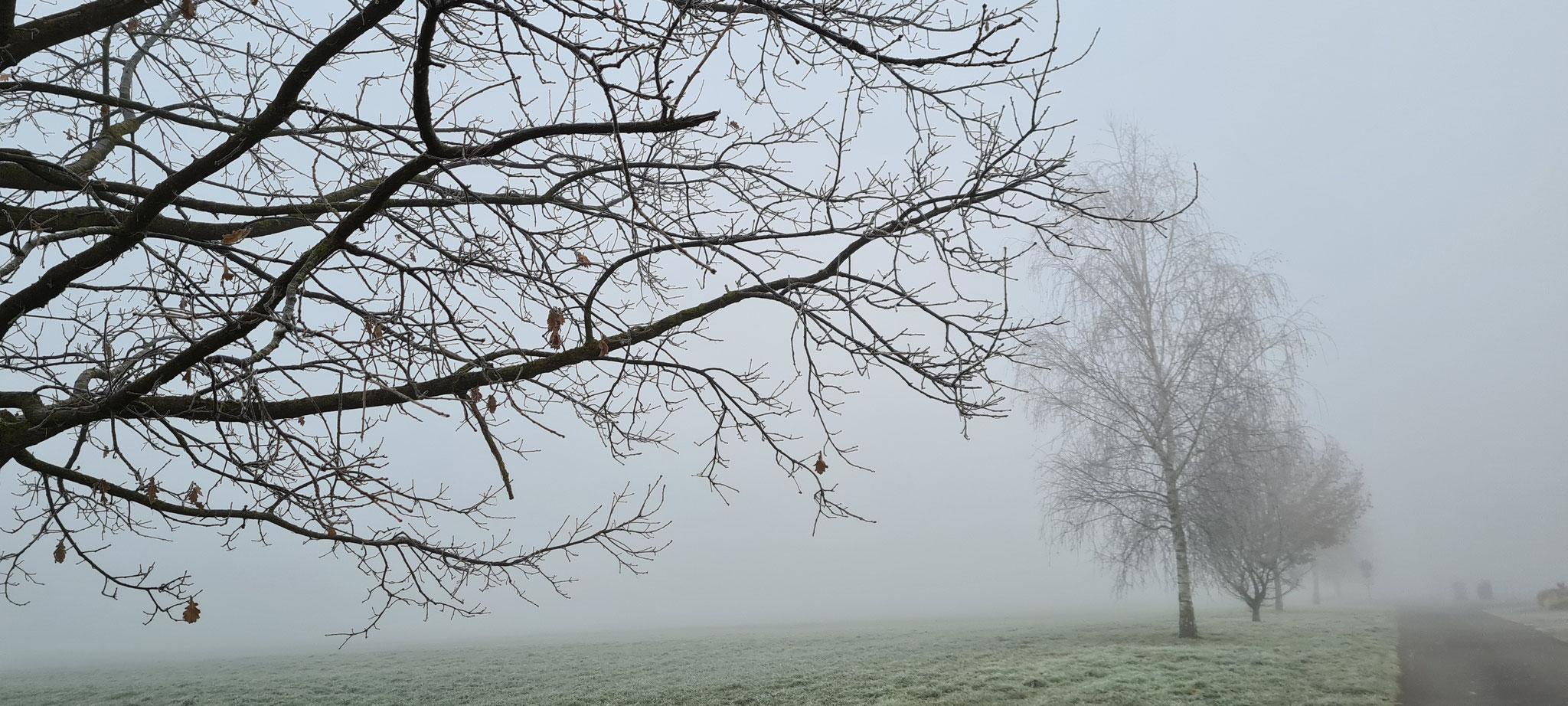 Nebelstimmung beim Spazieren
