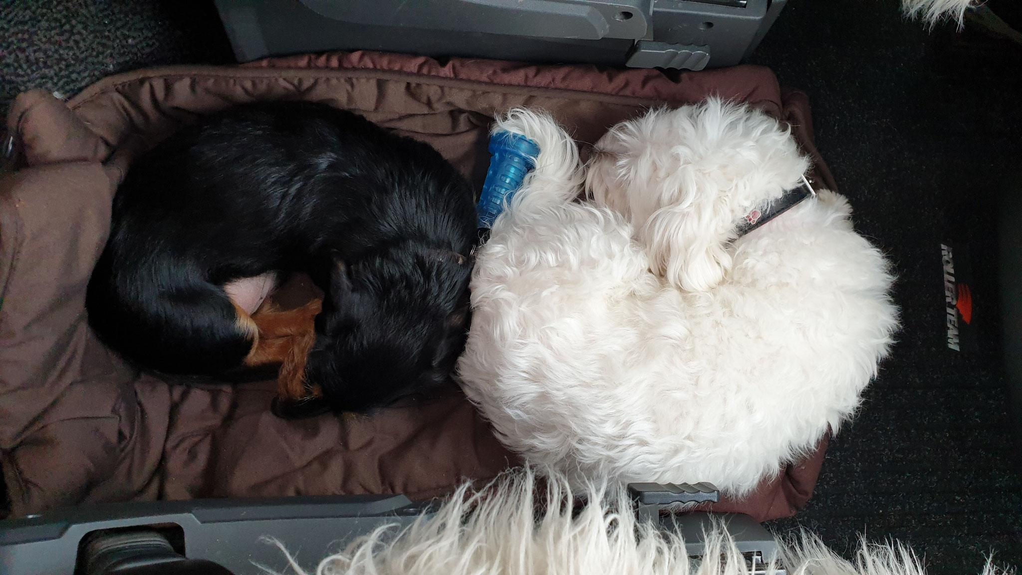 Kaum on Tour, schlafen die beiden wohlig ein