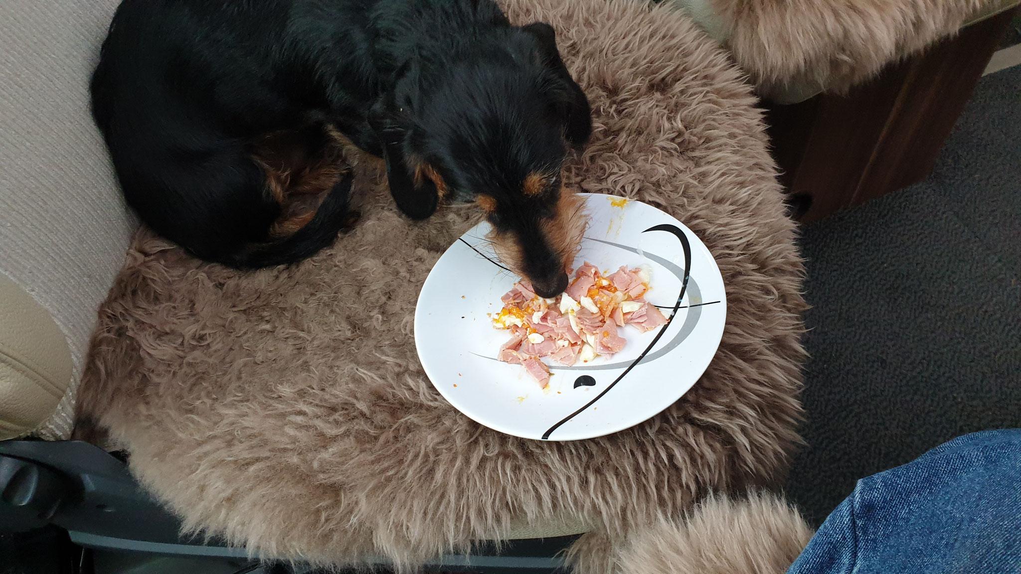 Selbst Wilson & Olly bekommen Schinken-Ei zum Frühstück