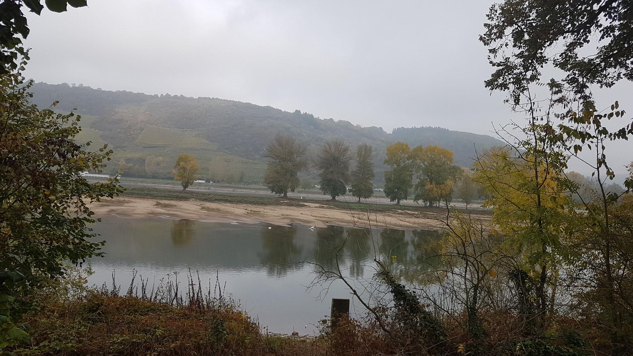 Es gibt viel zu entdecken entlang des Rheins