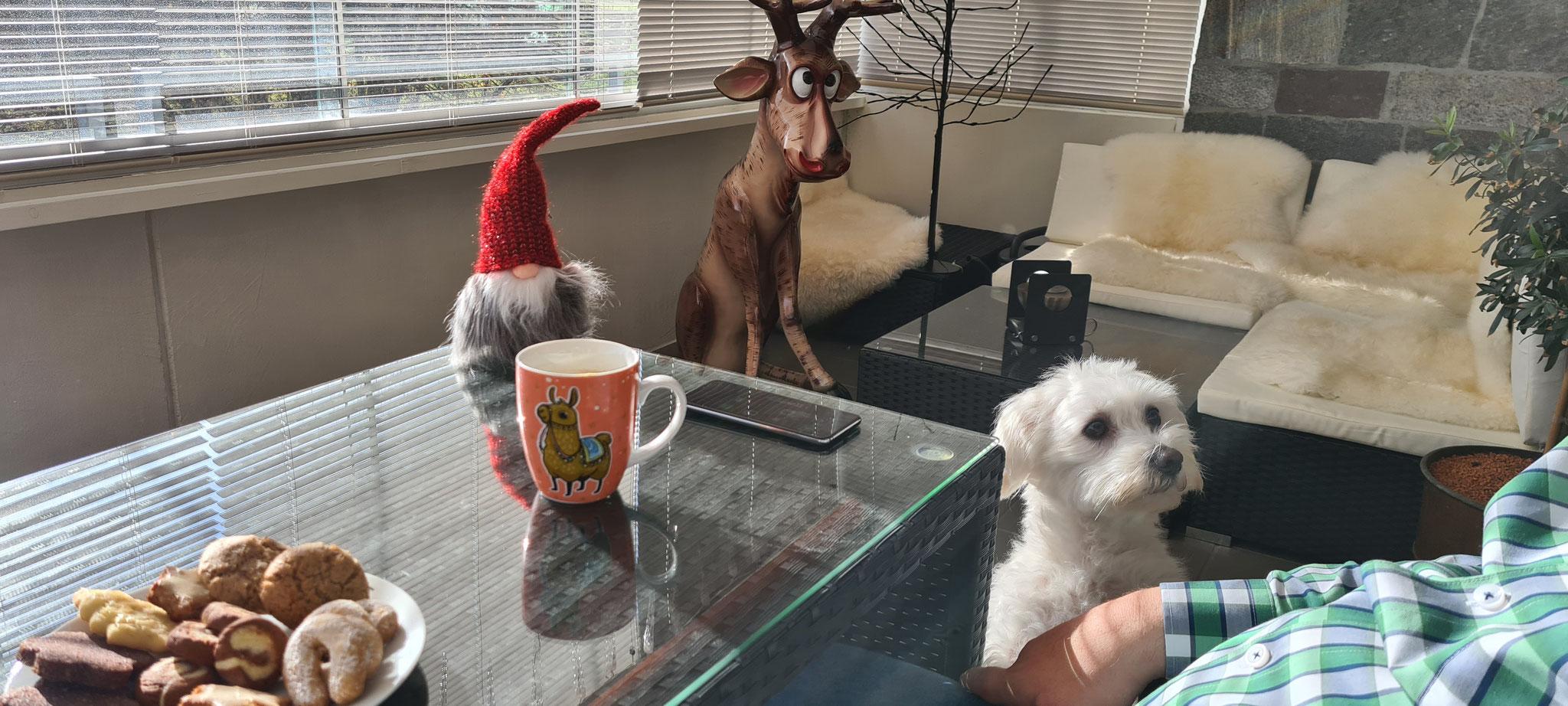 Kaffee und Weihnachtsplätzchen beim Aufbau...