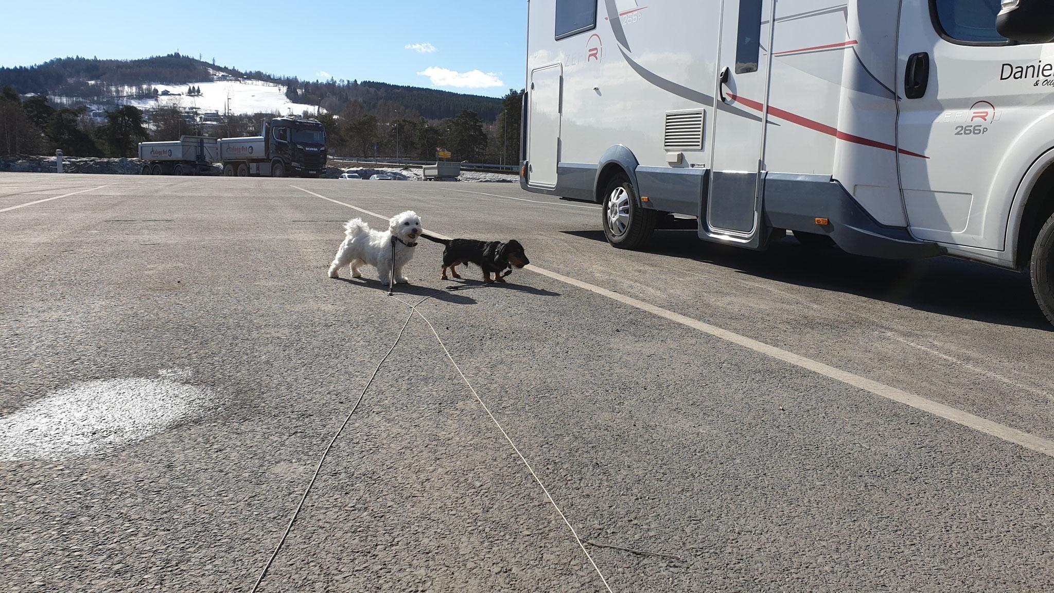 Hunde-Halt vor Lillehammer