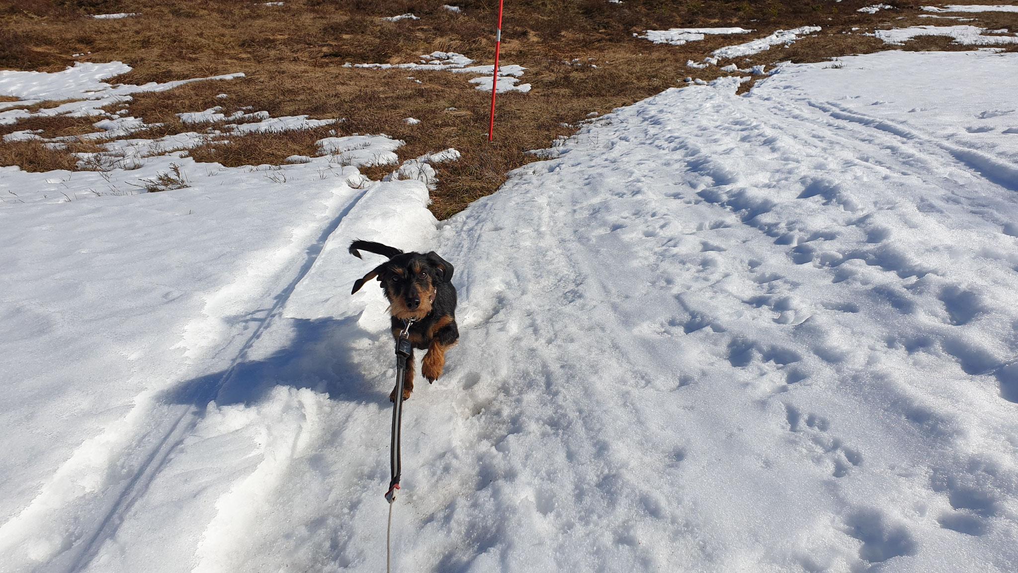 Sonne und Schnee ...Olly gefällt es