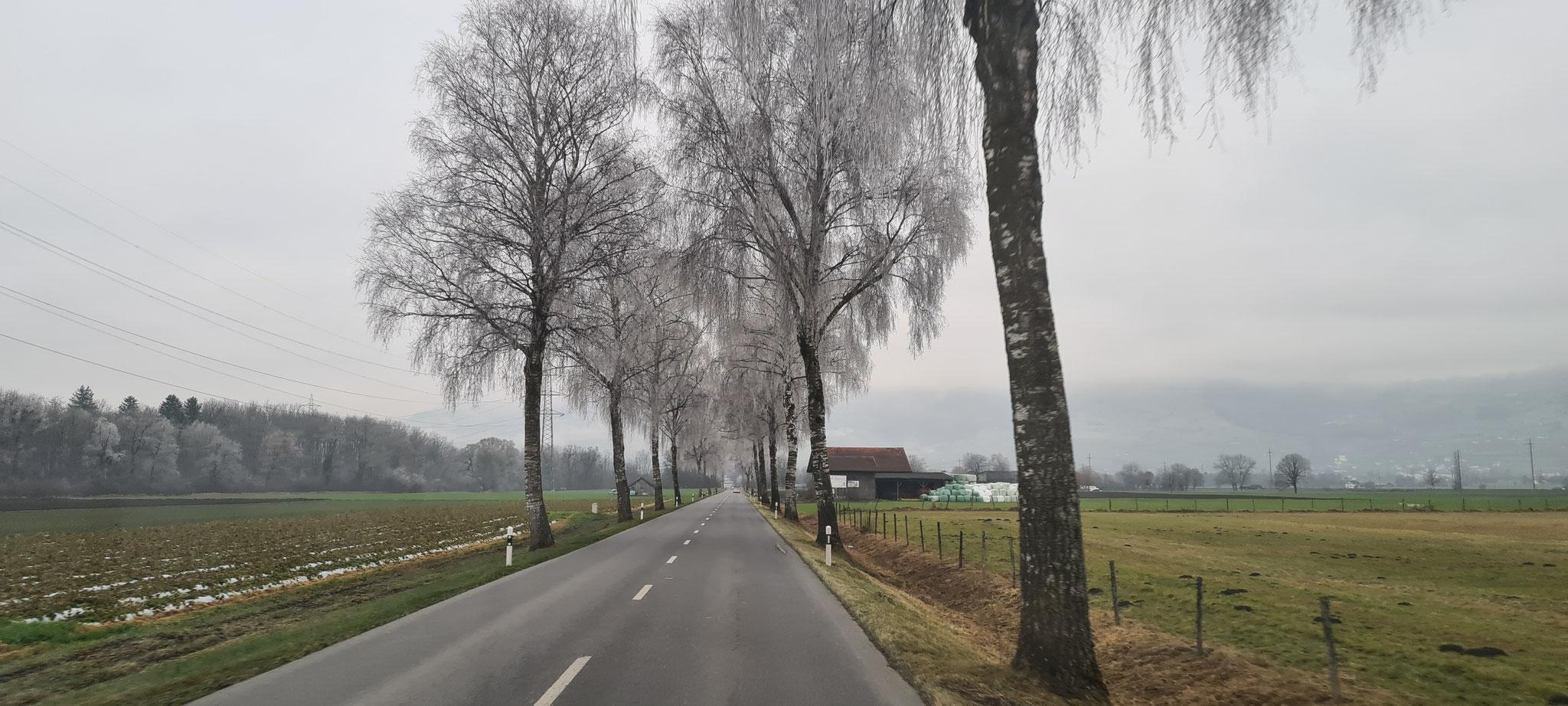 Trotz Nebel sieht die Landschaft toll aus
