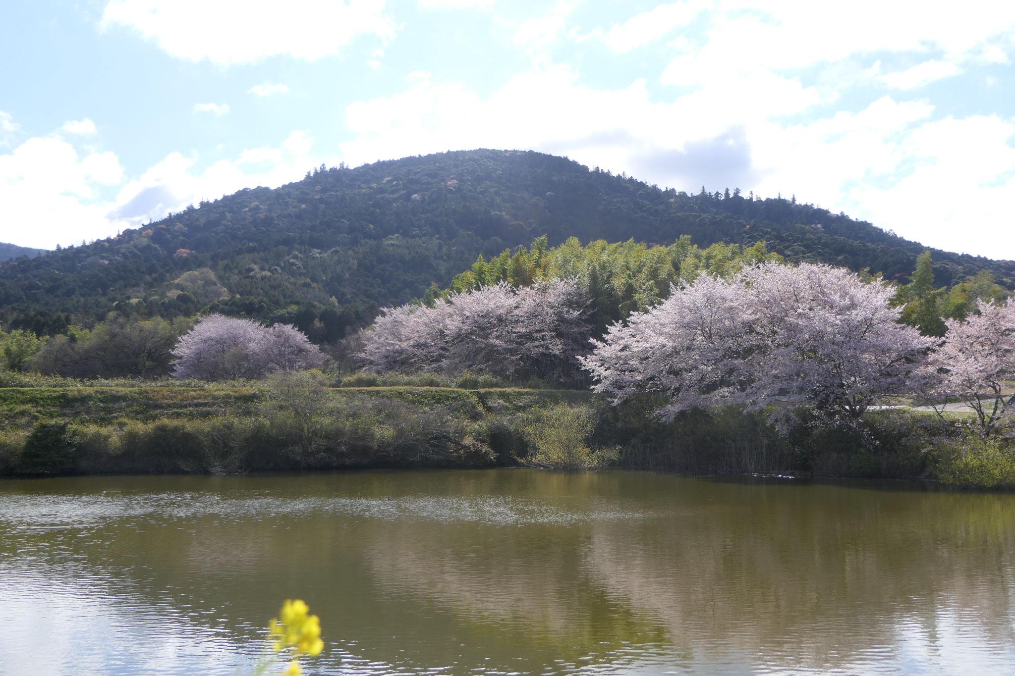 井寺池より三輪山を望む