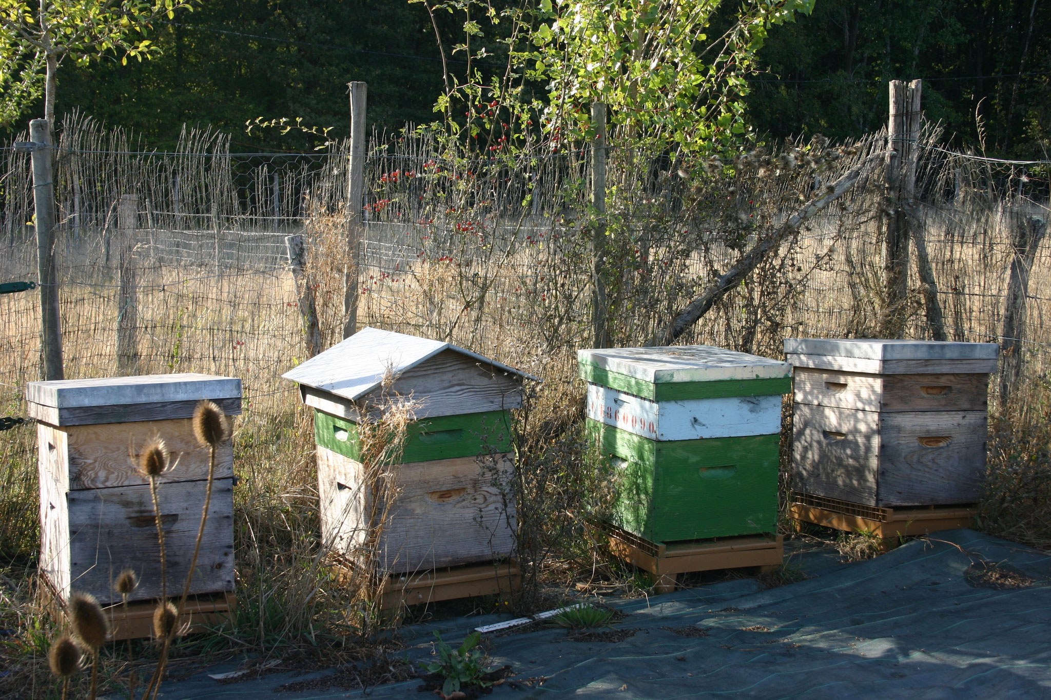 Hives for the bees