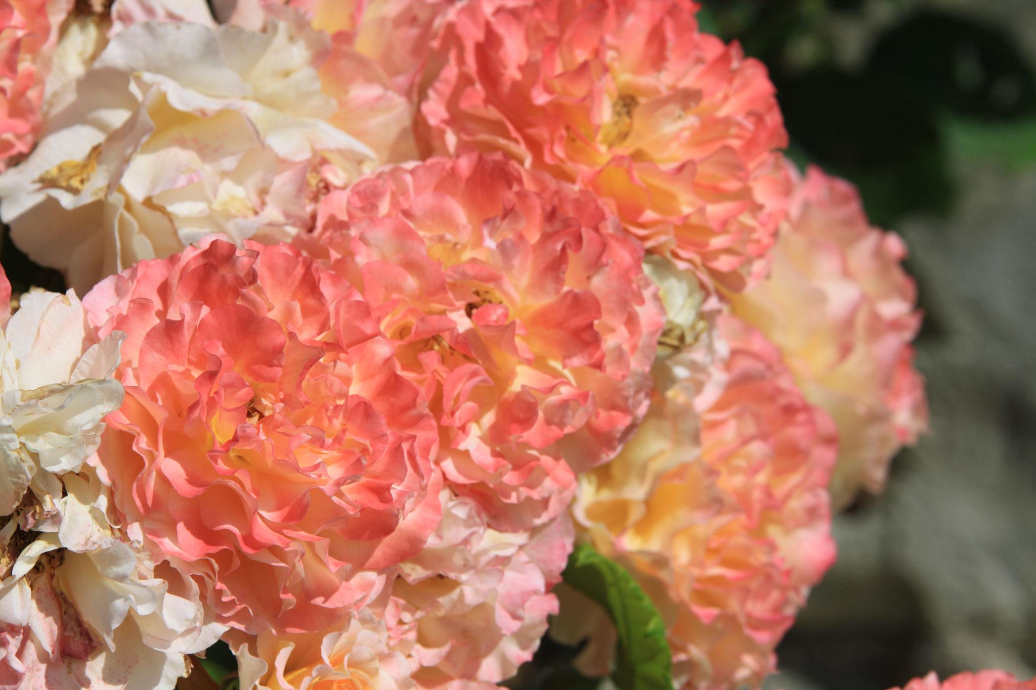 Les fleurs du Domaine