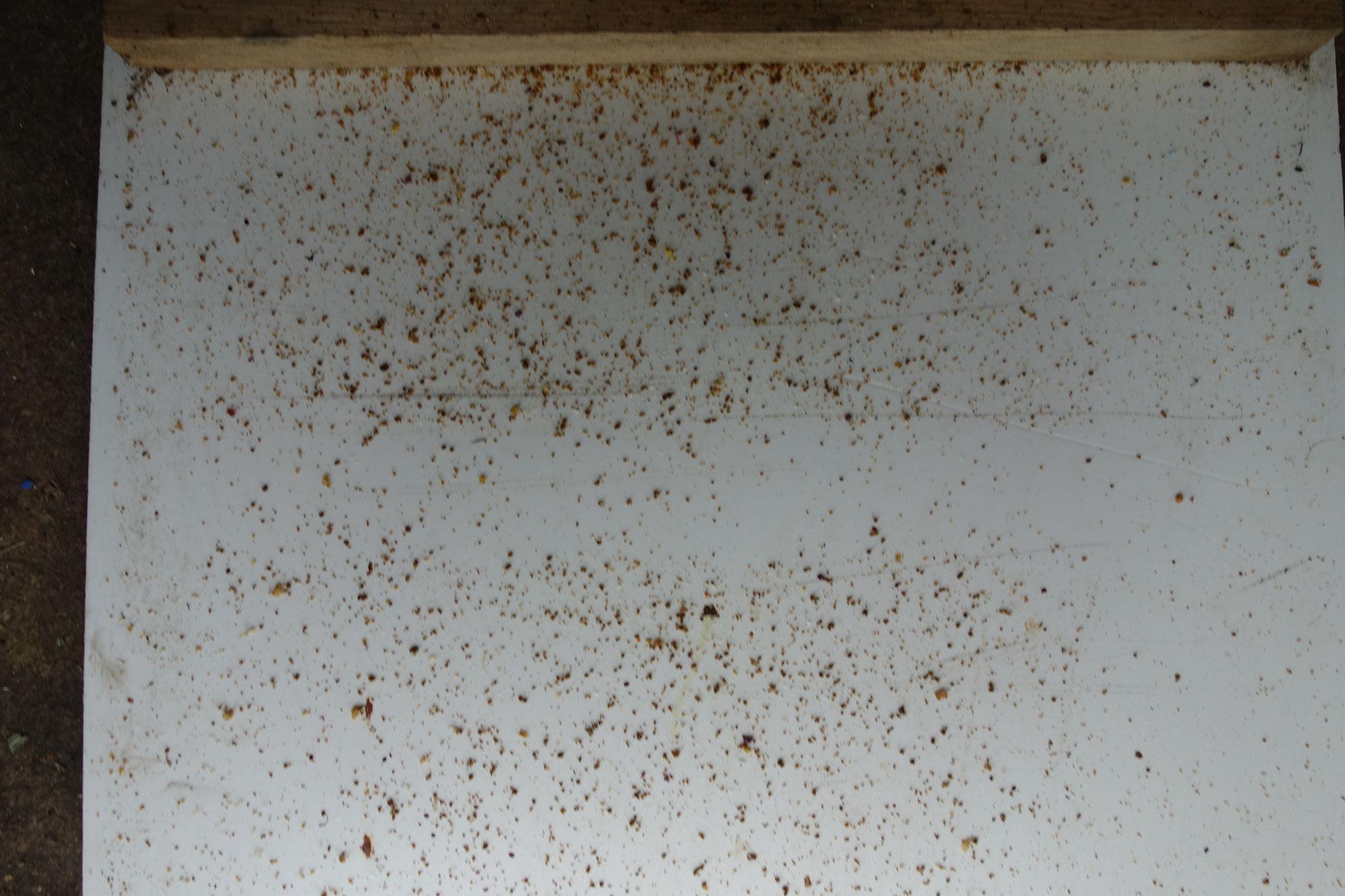 Bild2: Gemüll. Sieht schlimm aus. Aber die Zahl der Varroen lag deutlich unter der Befallsgrenze von 10 Stück pro Tag.