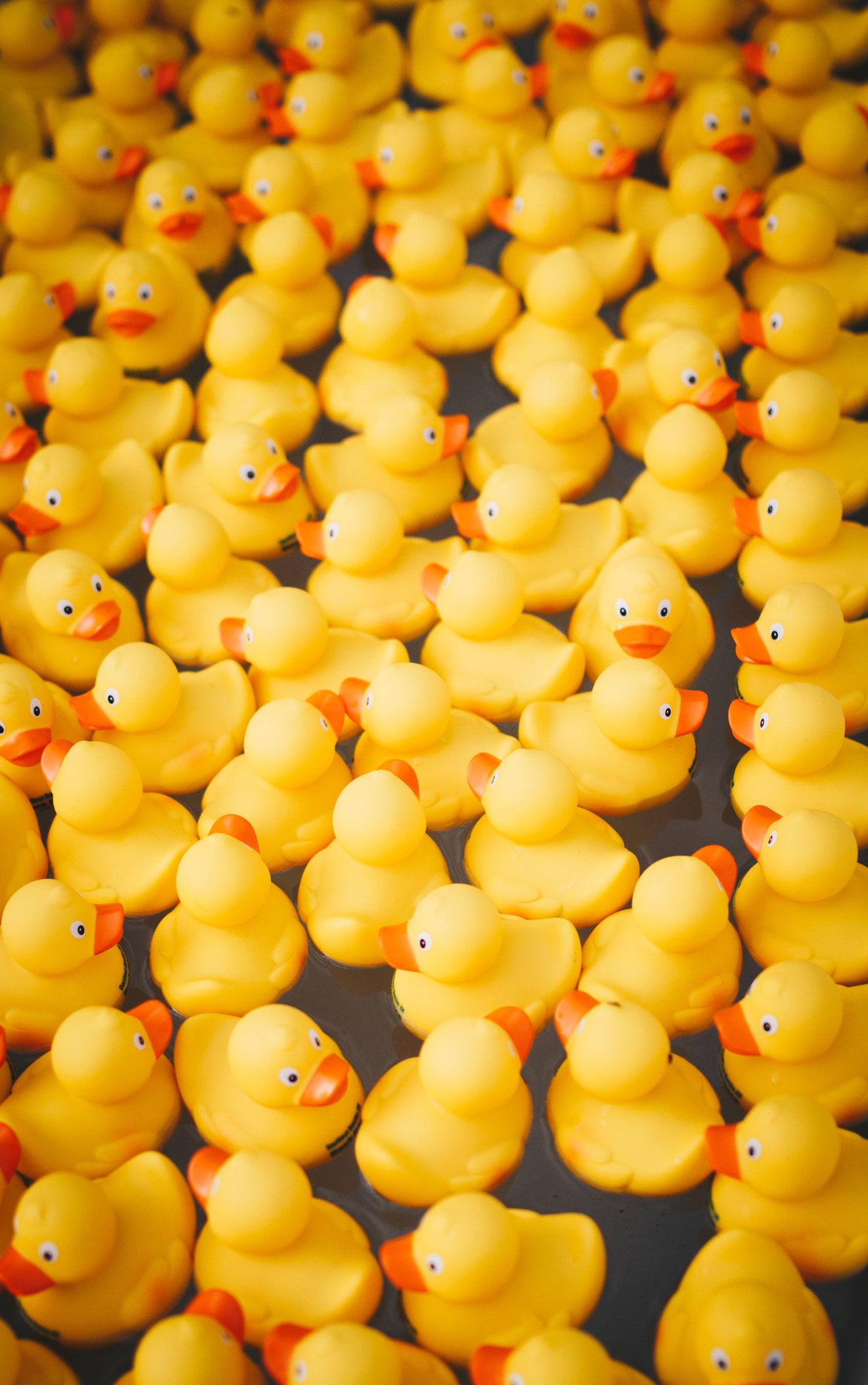 Samstag und Sonntag: Entenrennen (Feuerwehr Buchs-Dällikon)