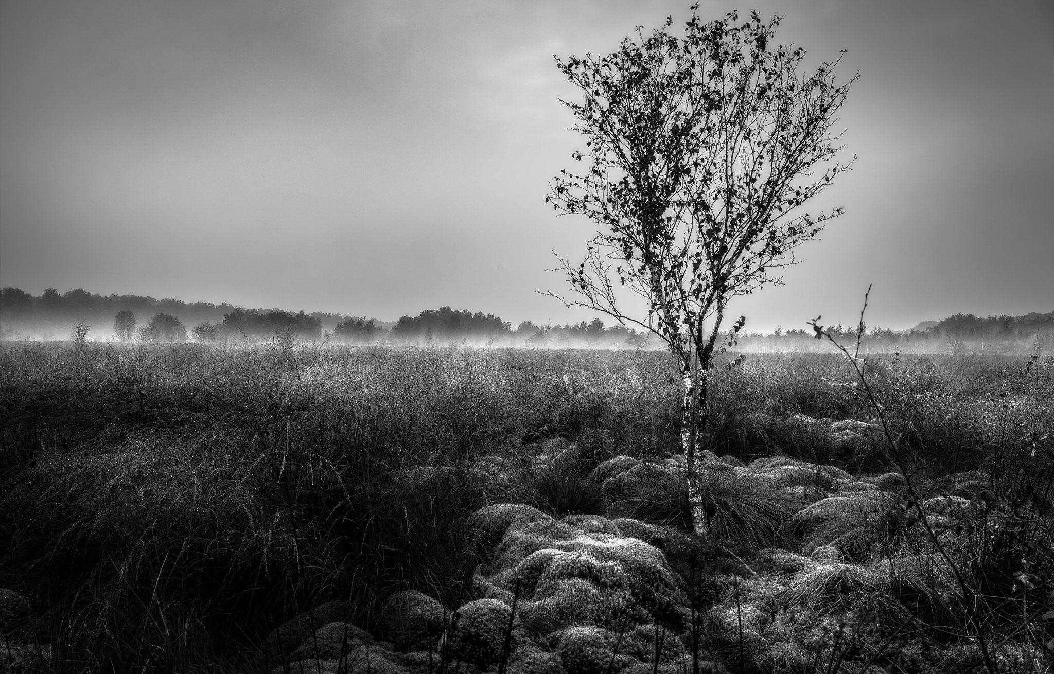 Witte veen, Martijn van Steenbergen, © 2018