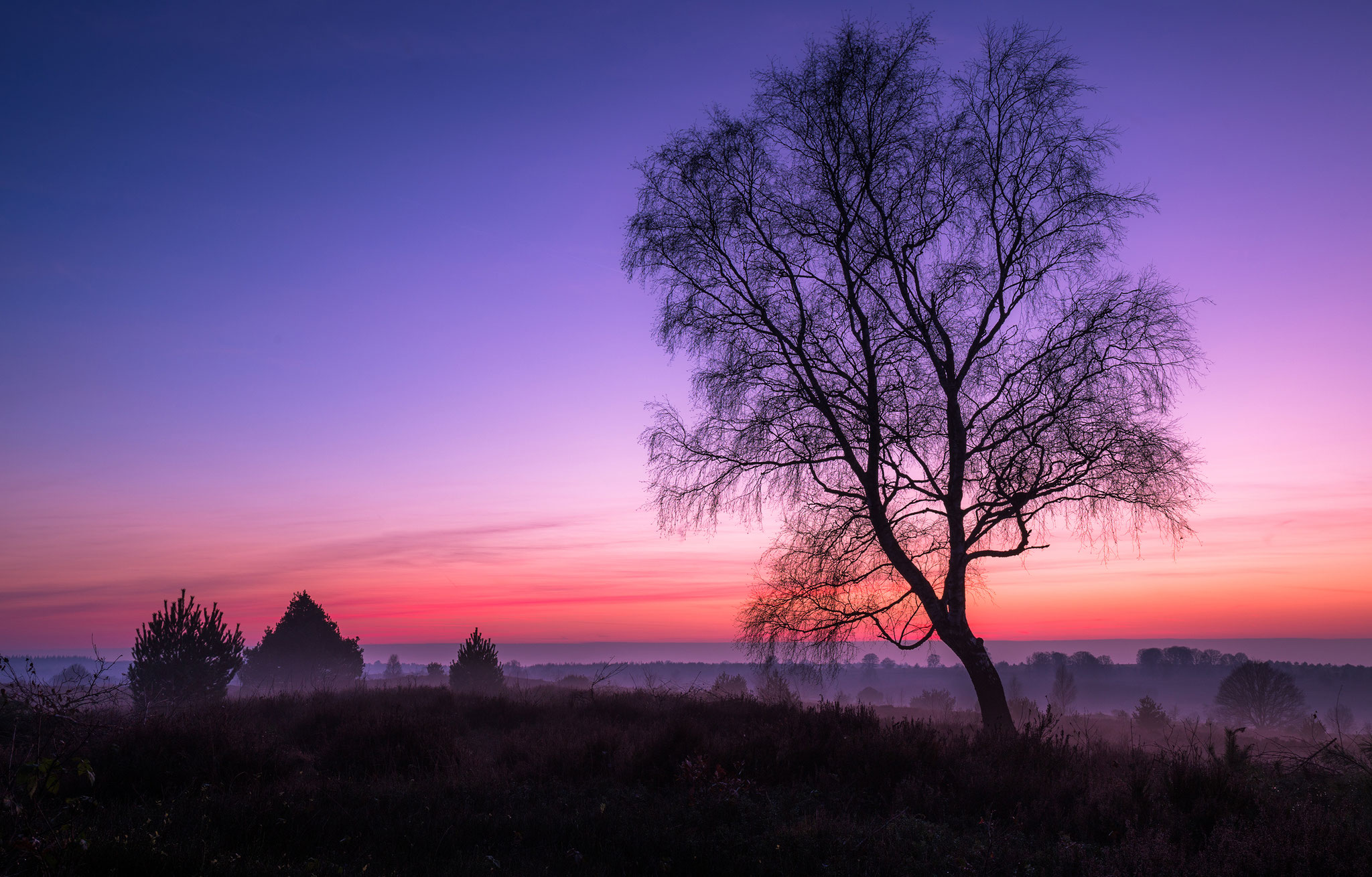 Dutch national park Sallandse heuvelrug, Martijn van Steenbergen, © 2018