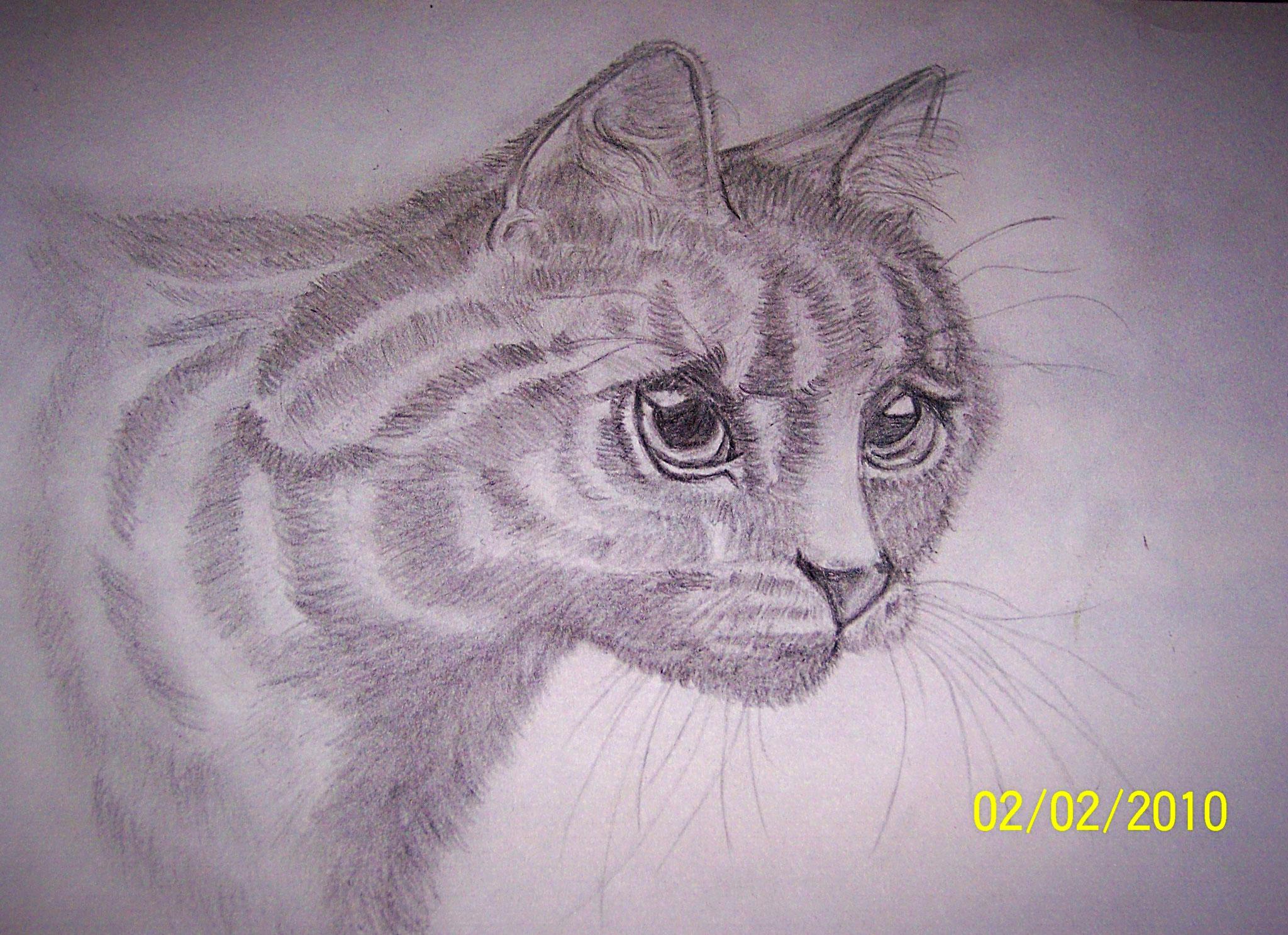 Katze mit Bleistift auf Papier